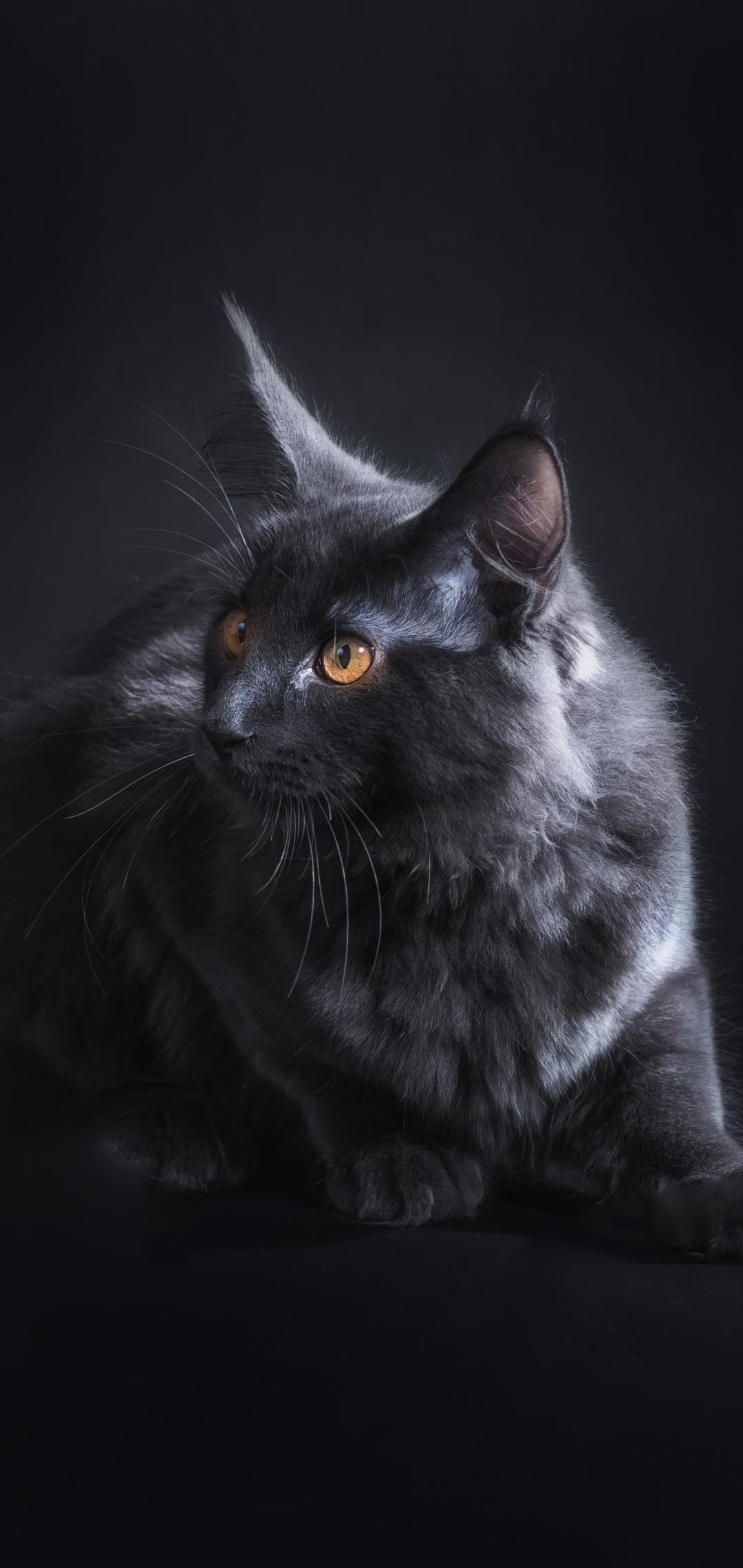 black-cat-5k-pk.jpg