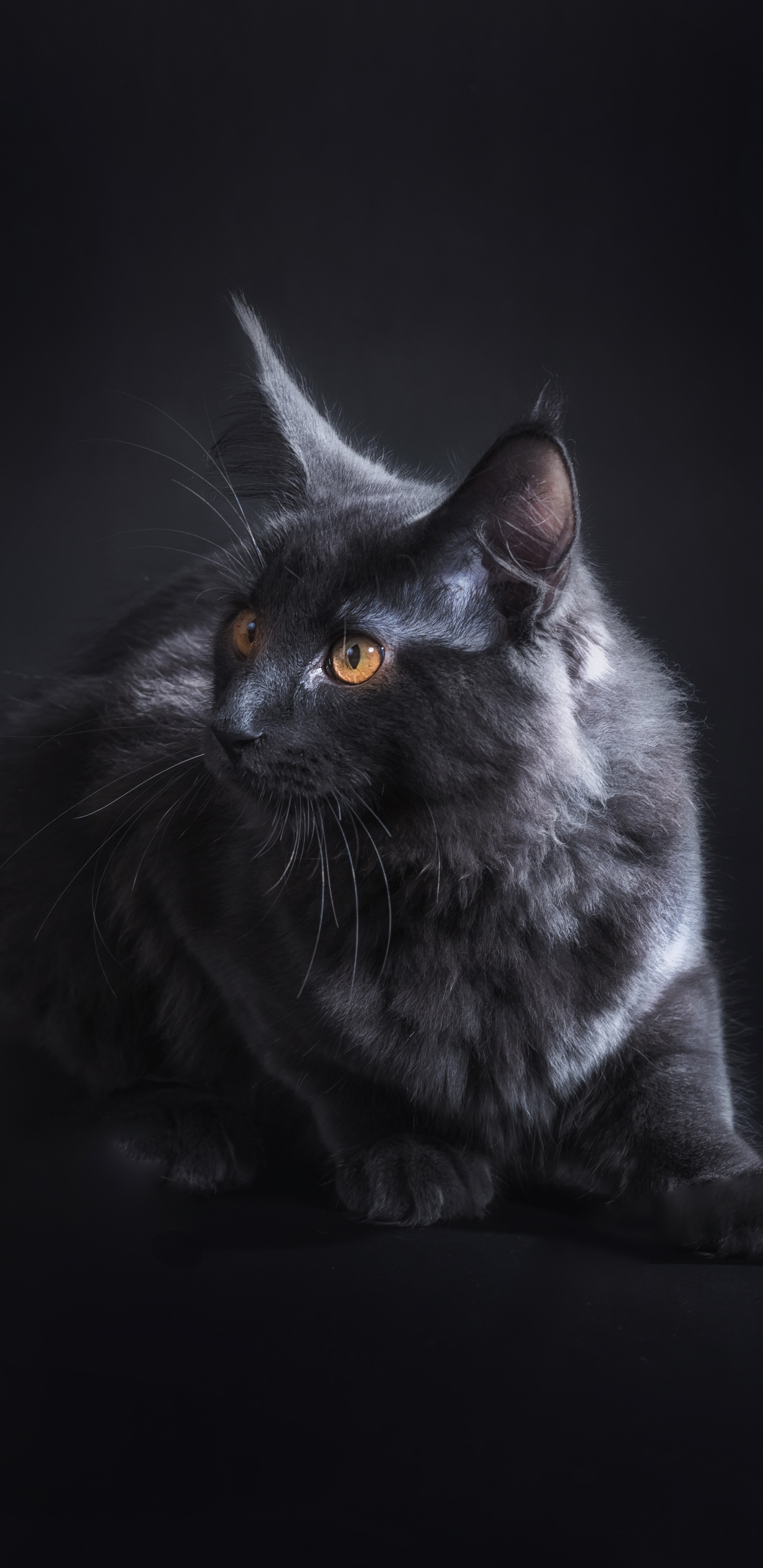 1440x2960 Black Cat 5k Samsung Galaxy Note 9 8 S9 S8 S8 Qhd Hd 4k
