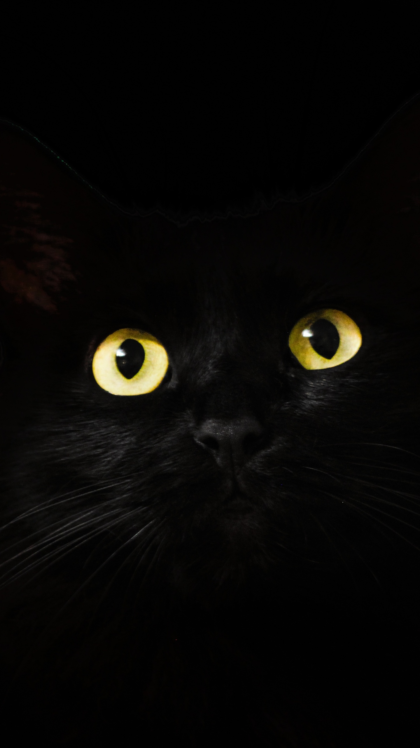 1440x2560 Black Cat Eyes Dark 5k Samsung Galaxy S6 S7 Google