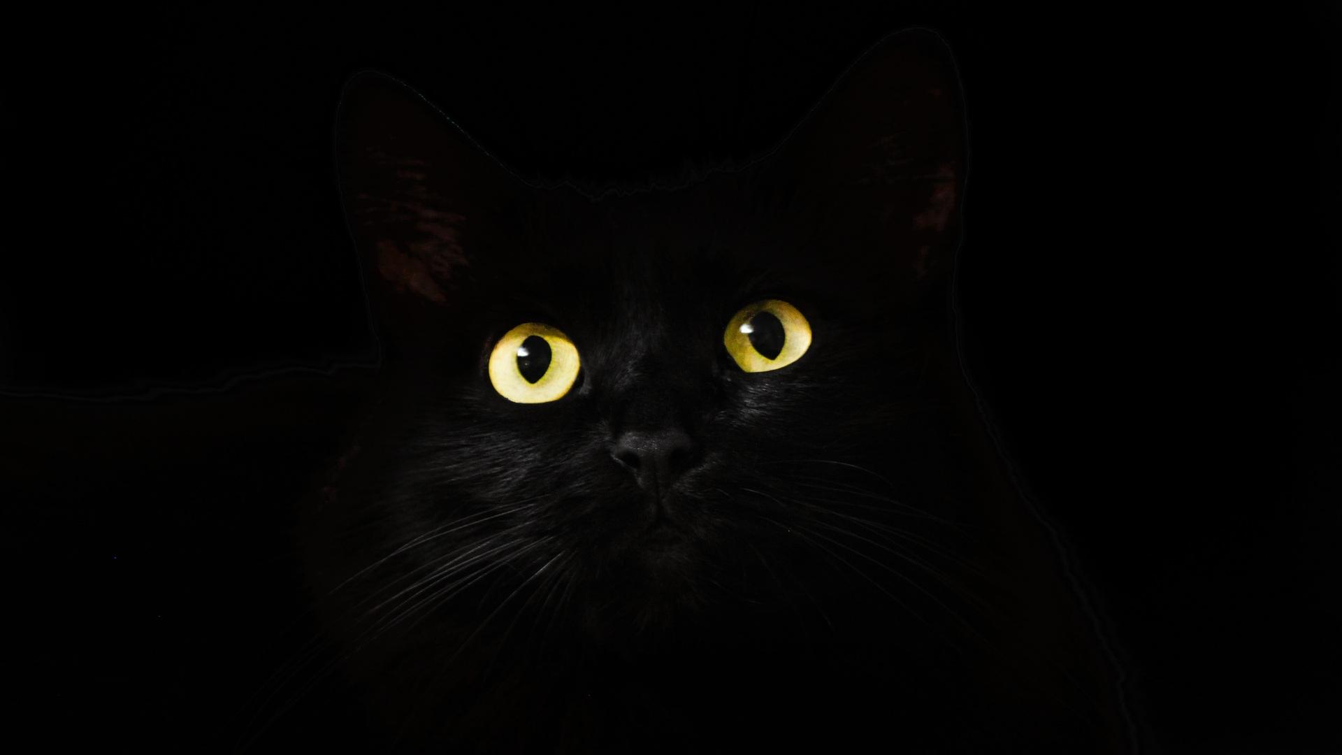 1920x1080 Black Cat Eyes Dark 5k Laptop Full Hd 1080p Hd 4k