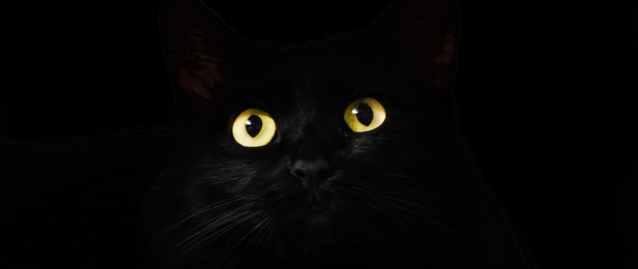 2560x1080 Black Cat Eyes Dark 5k 2560x1080 Resolution Hd 4k Wallpapers Images Backgrounds Photos And Pictures