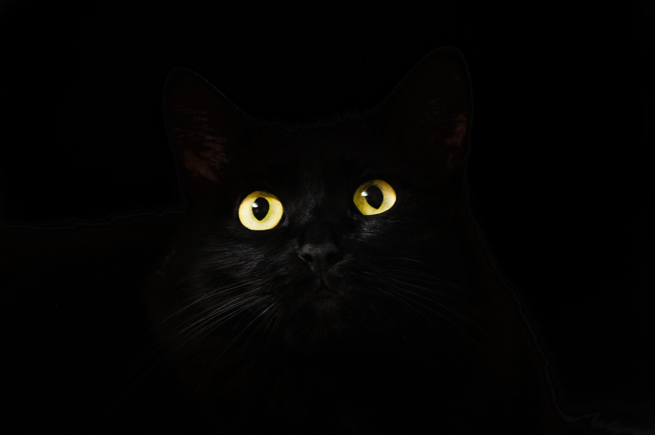 2560x1700 Black Cat Eyes Dark 5k Chromebook Pixel Hd 4k Wallpapers
