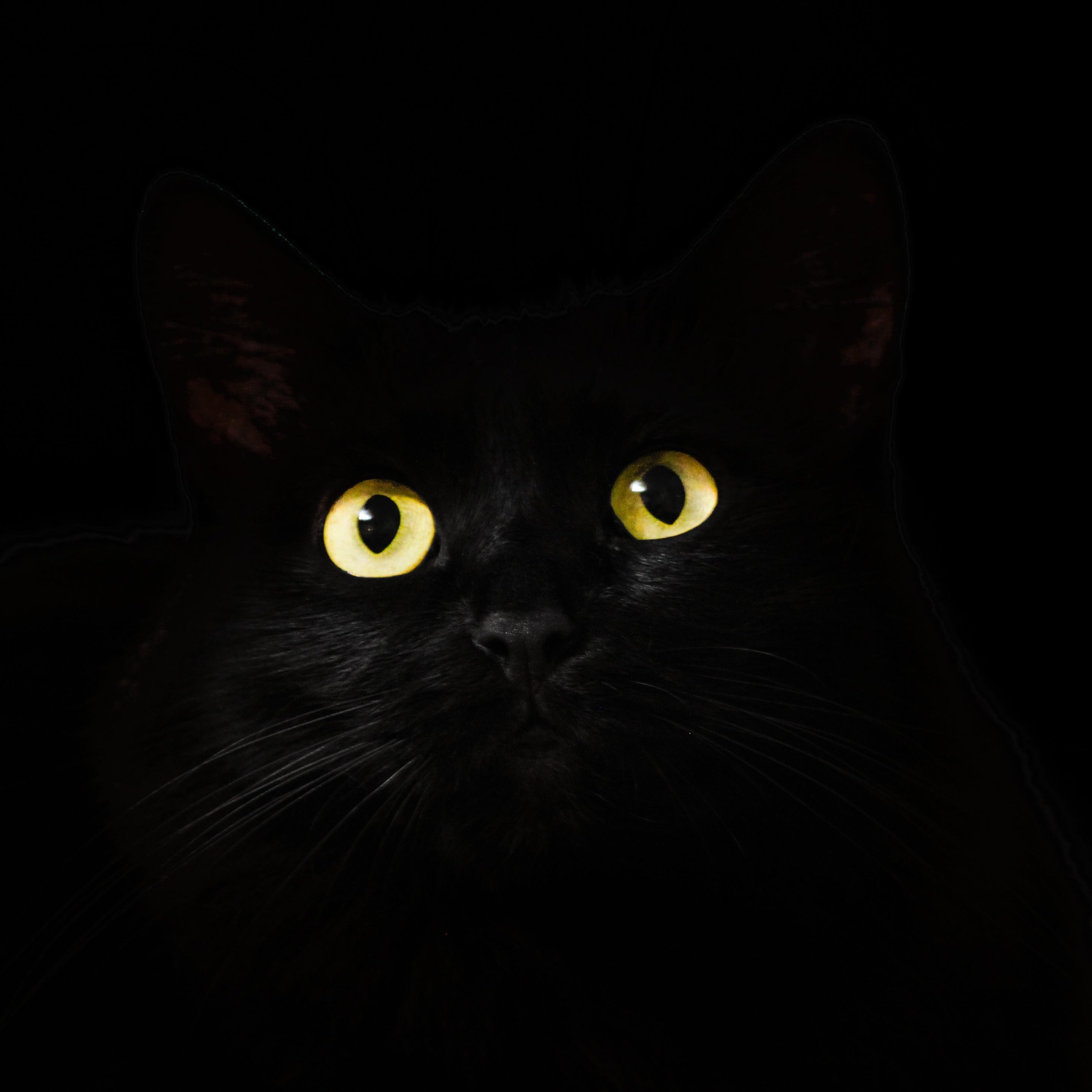 2932x2932 Black Cat Eyes Dark 5k Ipad Pro Retina Display Hd 4k
