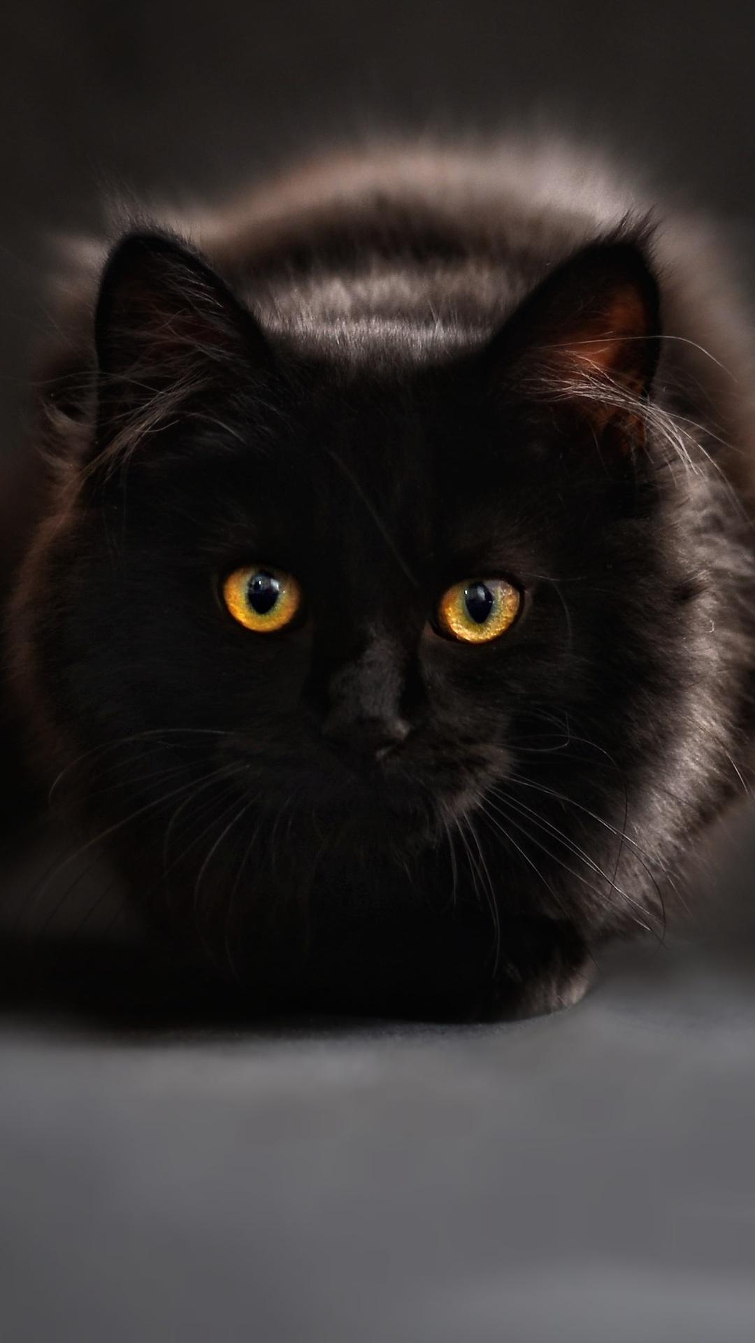 1080x1920 Black Cat Glowing Eyes 4k Iphone 7 6s 6 Plus Pixel Xl