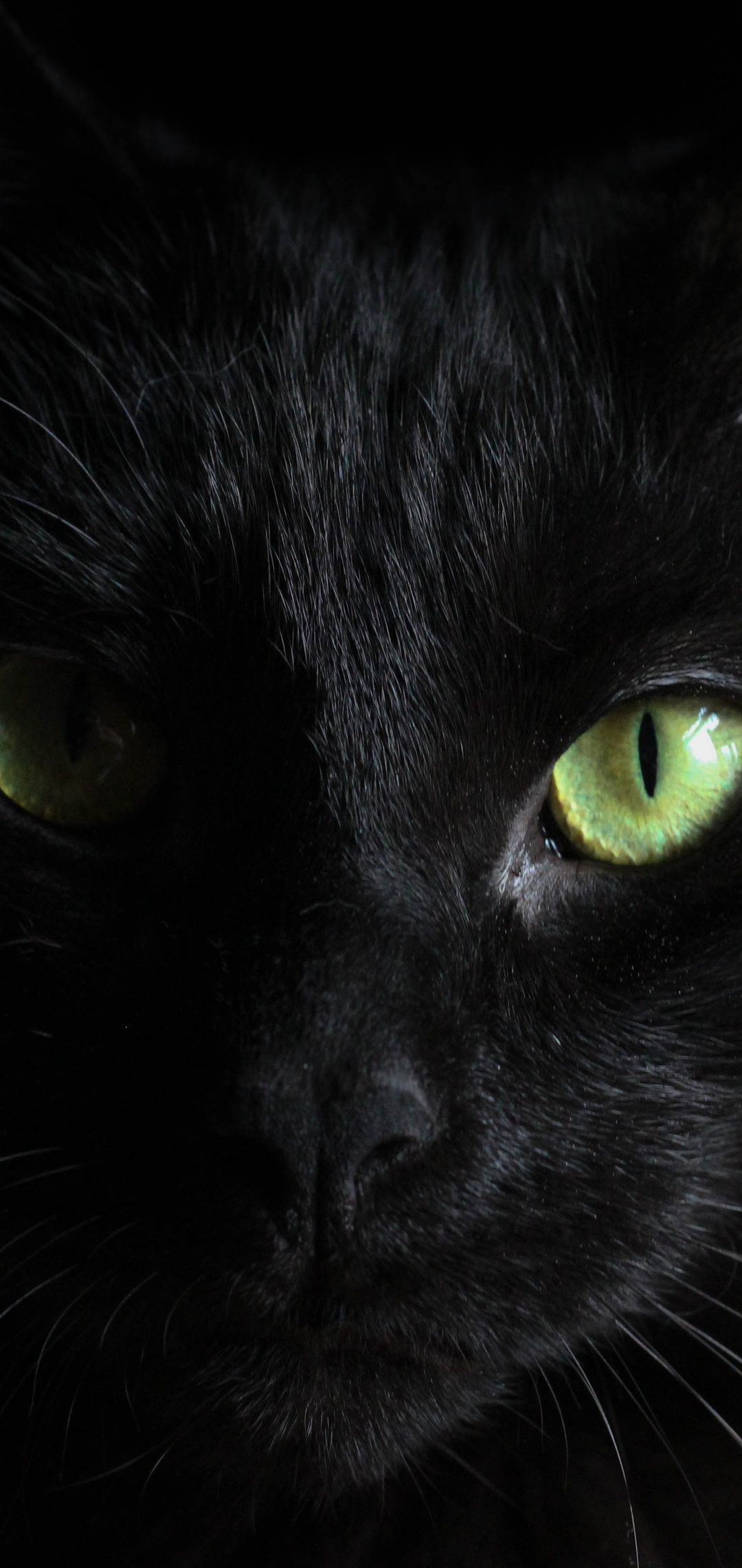 black-cat-green-eyes-wl.jpg