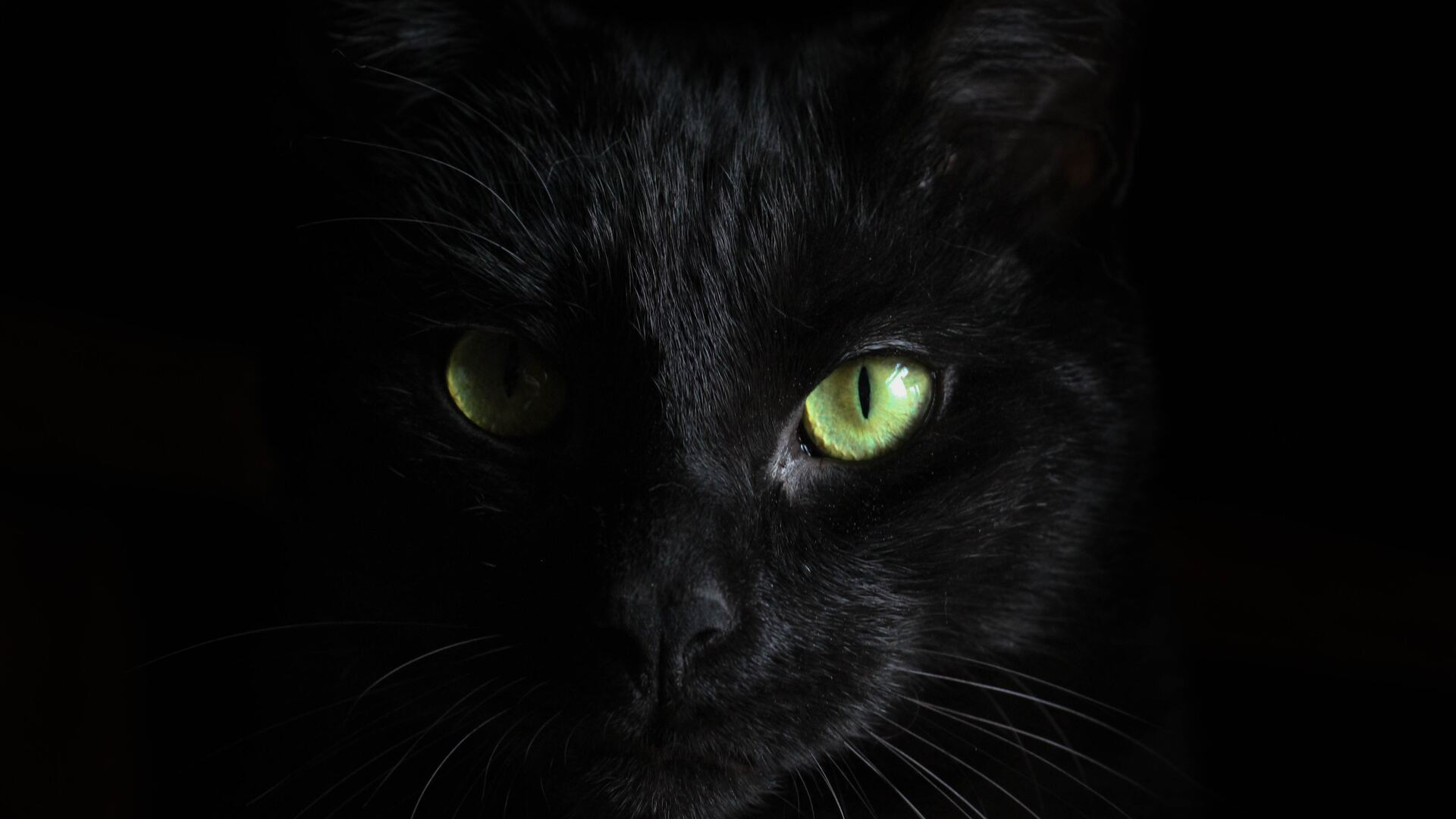 1920x1080 Black Cat Green Eyes Laptop Full Hd 1080p Hd 4k Wallpapers Images Backgrounds Photos And Pictures