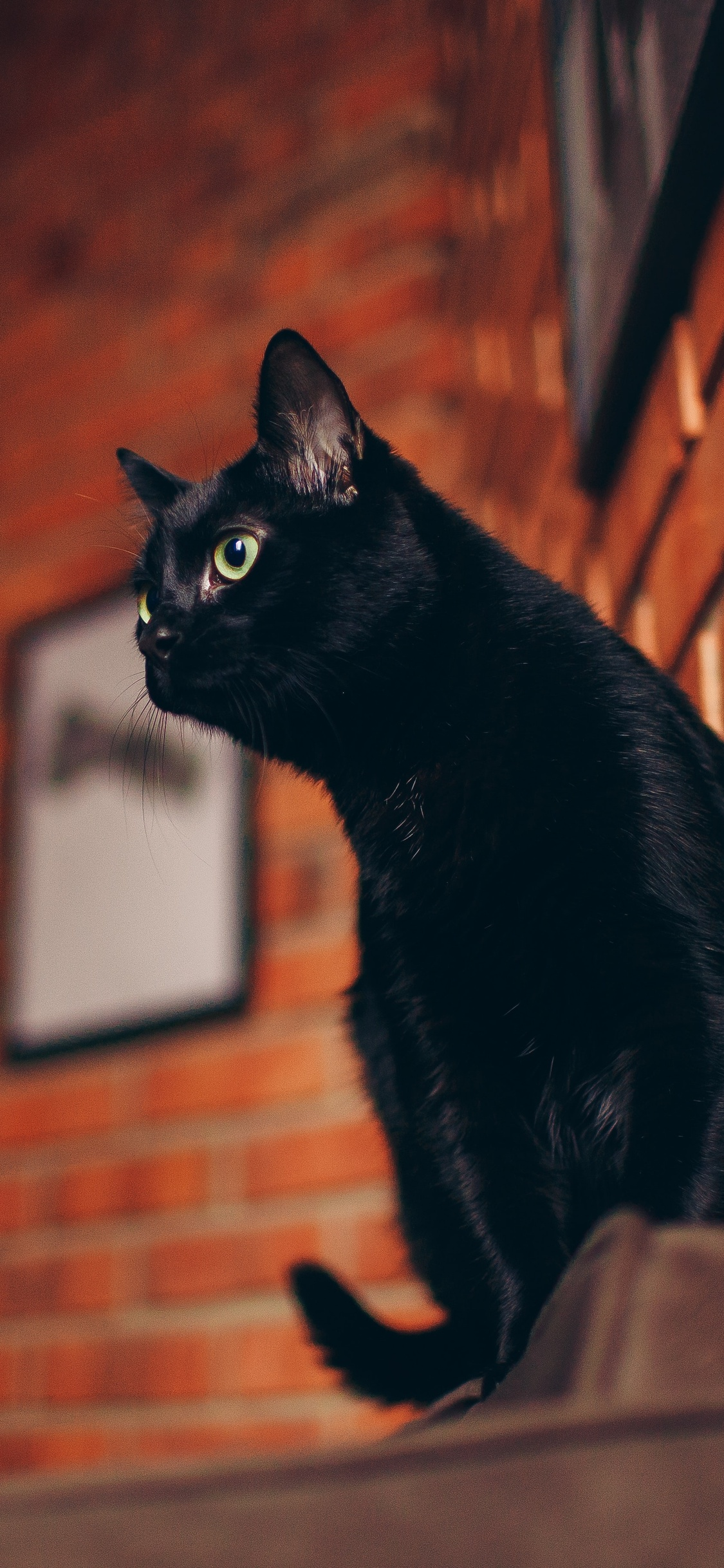 black-cat-portrait-5k-sw.jpg