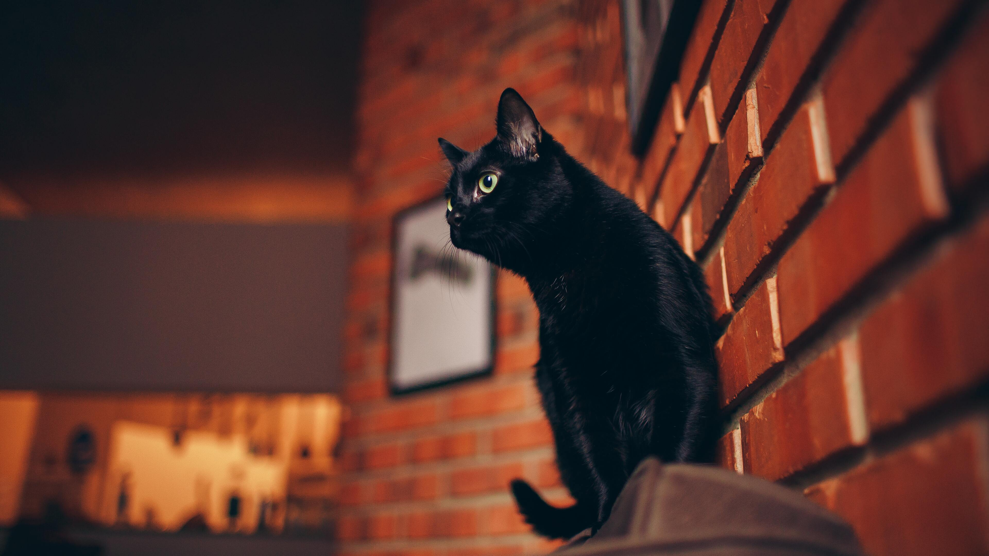 3840x2160 Black Cat Portrait 5k 4k Hd 4k Wallpapers Images Backgrounds Photos And Pictures