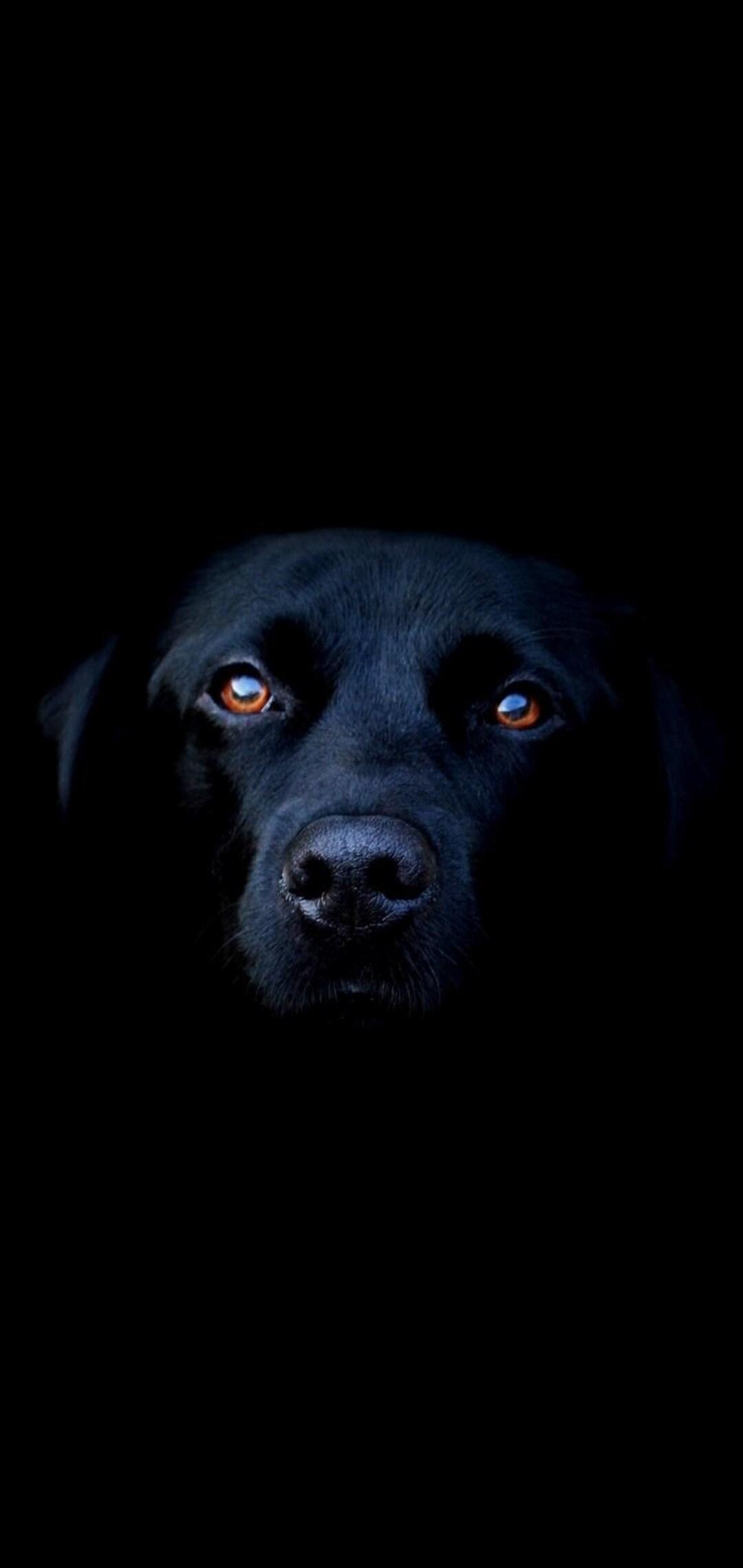 black-dog-image.jpg