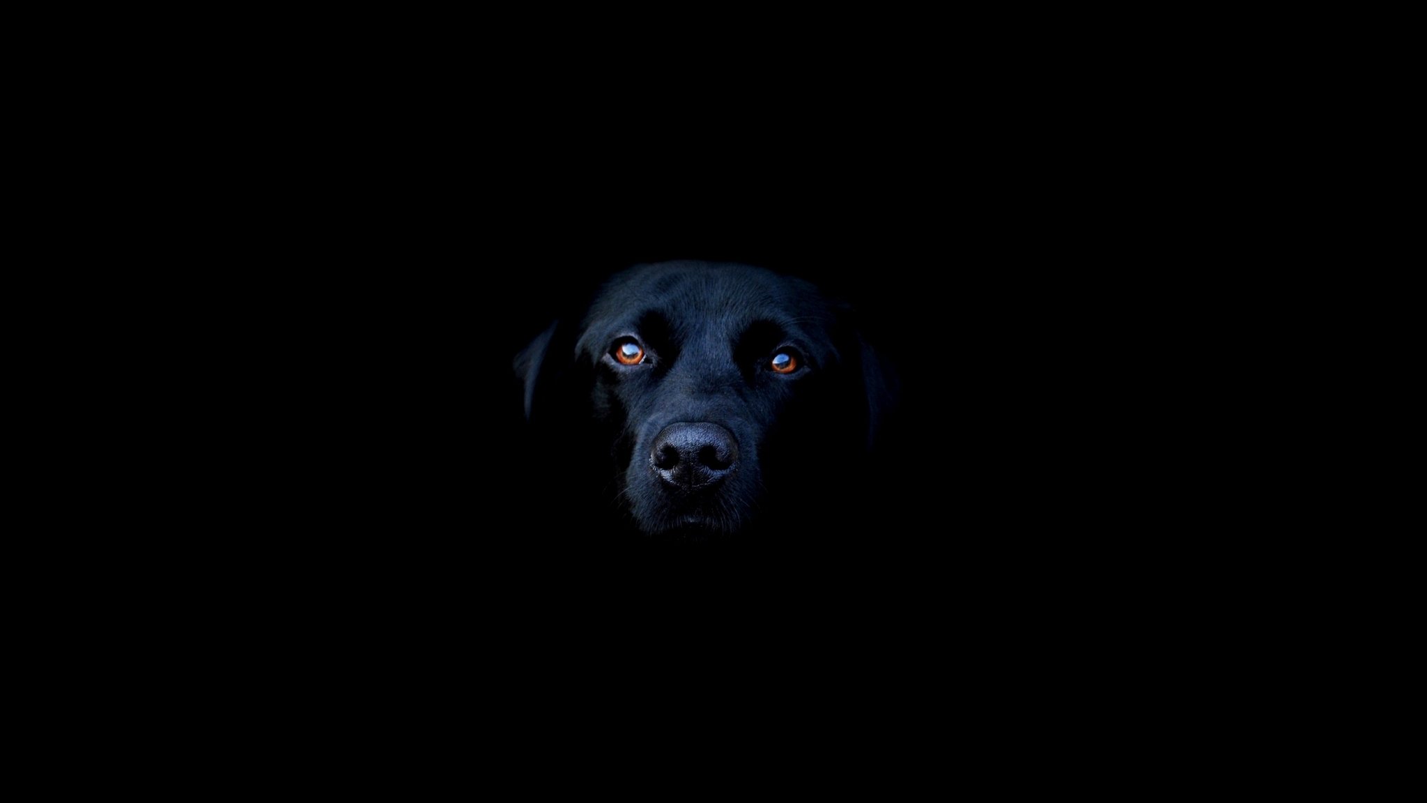 2048x1152 Black Dog Resolution HD 4k Wallpapers Images
