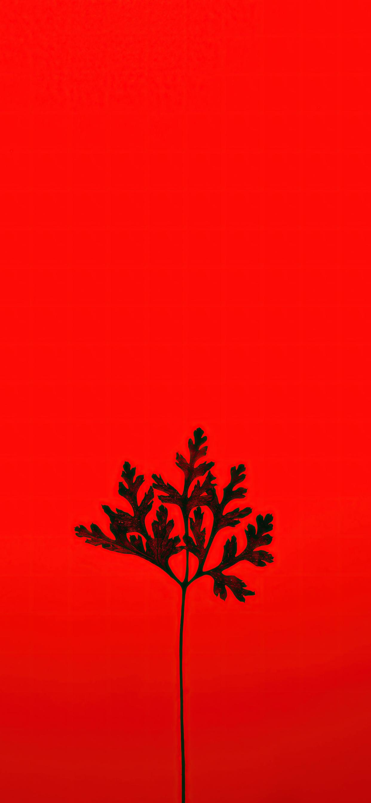 black-leaf-red-background-5k-bg.jpg