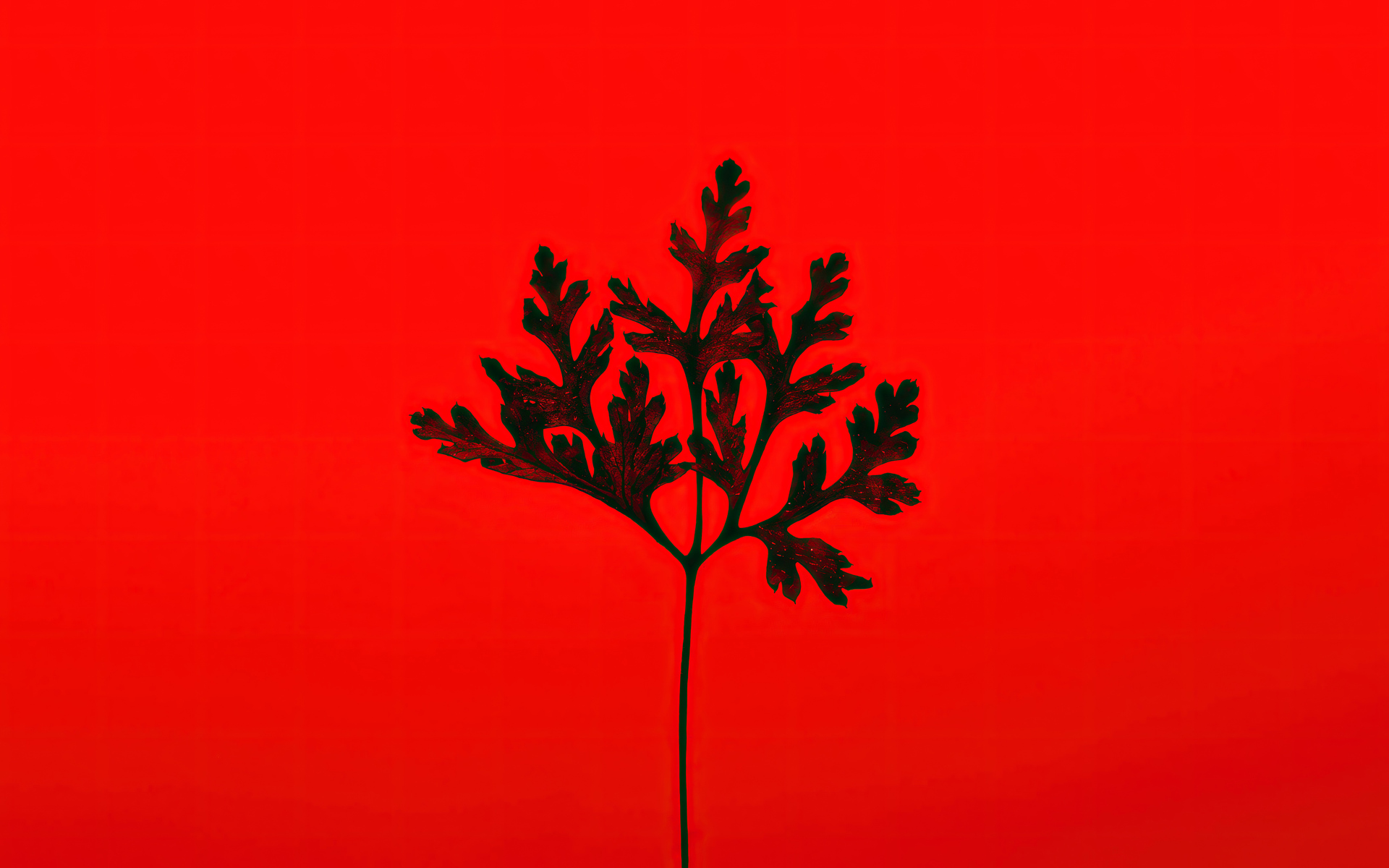black-leaf-red-background-5k-bg.jpg