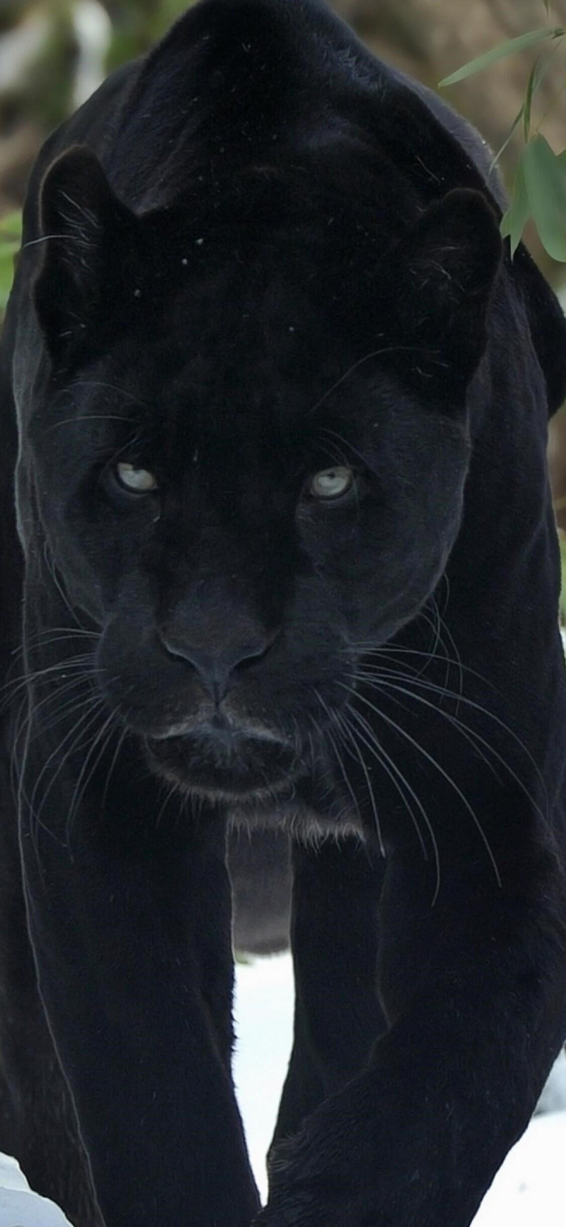 1125x2436 Black Panther Iphone Xs Iphone 10 Iphone X Hd 4k