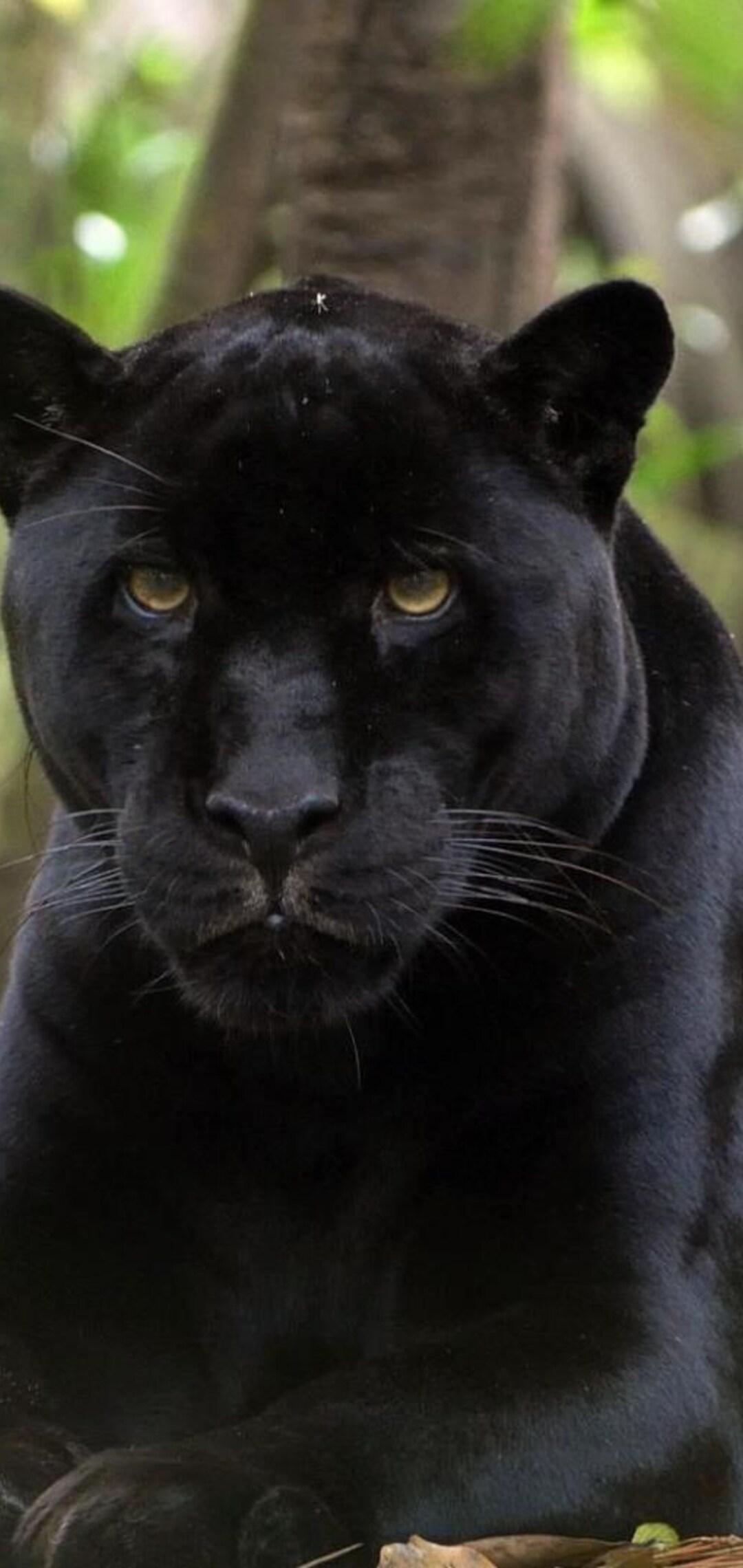 black-panther-2-hd.jpg
