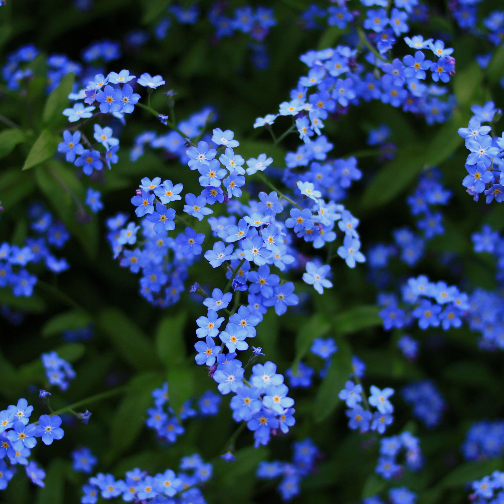 blossom-4k-2b.jpg
