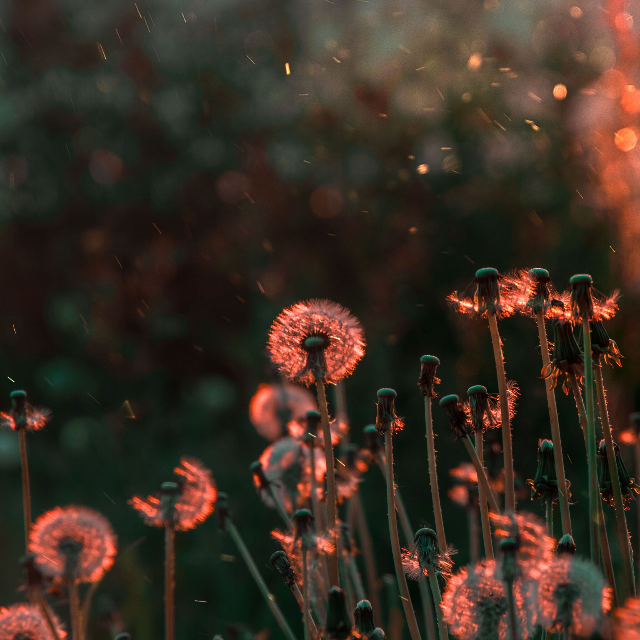 blossom-flower-field-5k-l9.jpg
