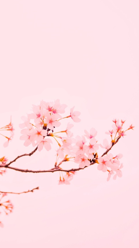 blossom-flower-plant-5k-j3.jpg