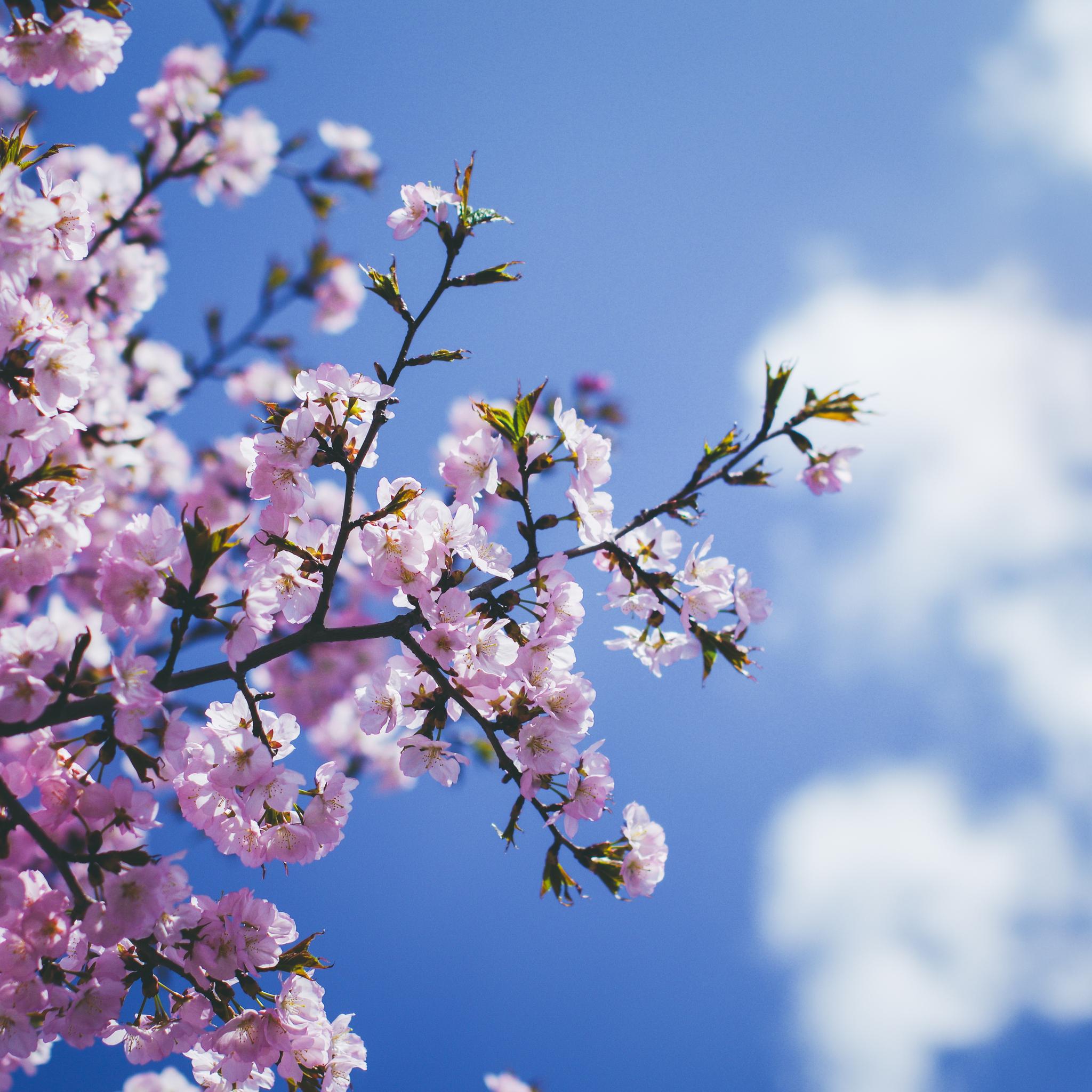blossom-flowers-5k-93.jpg