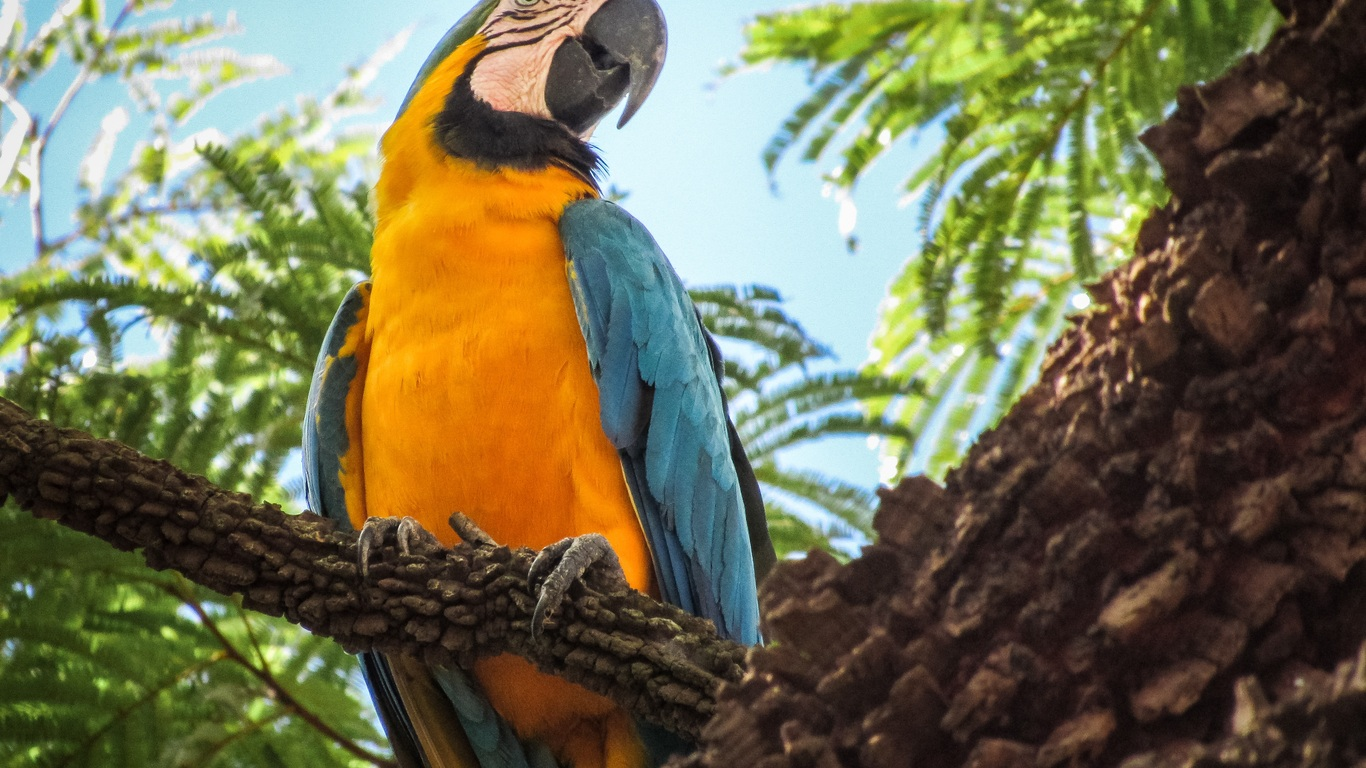 blue-and-yellow-macaw-4k-fy.jpg