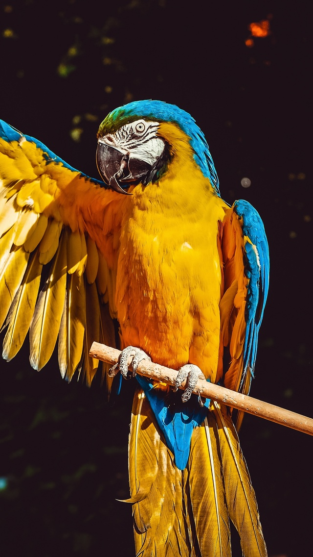blue-and-yellow-macaw-5k-as.jpg