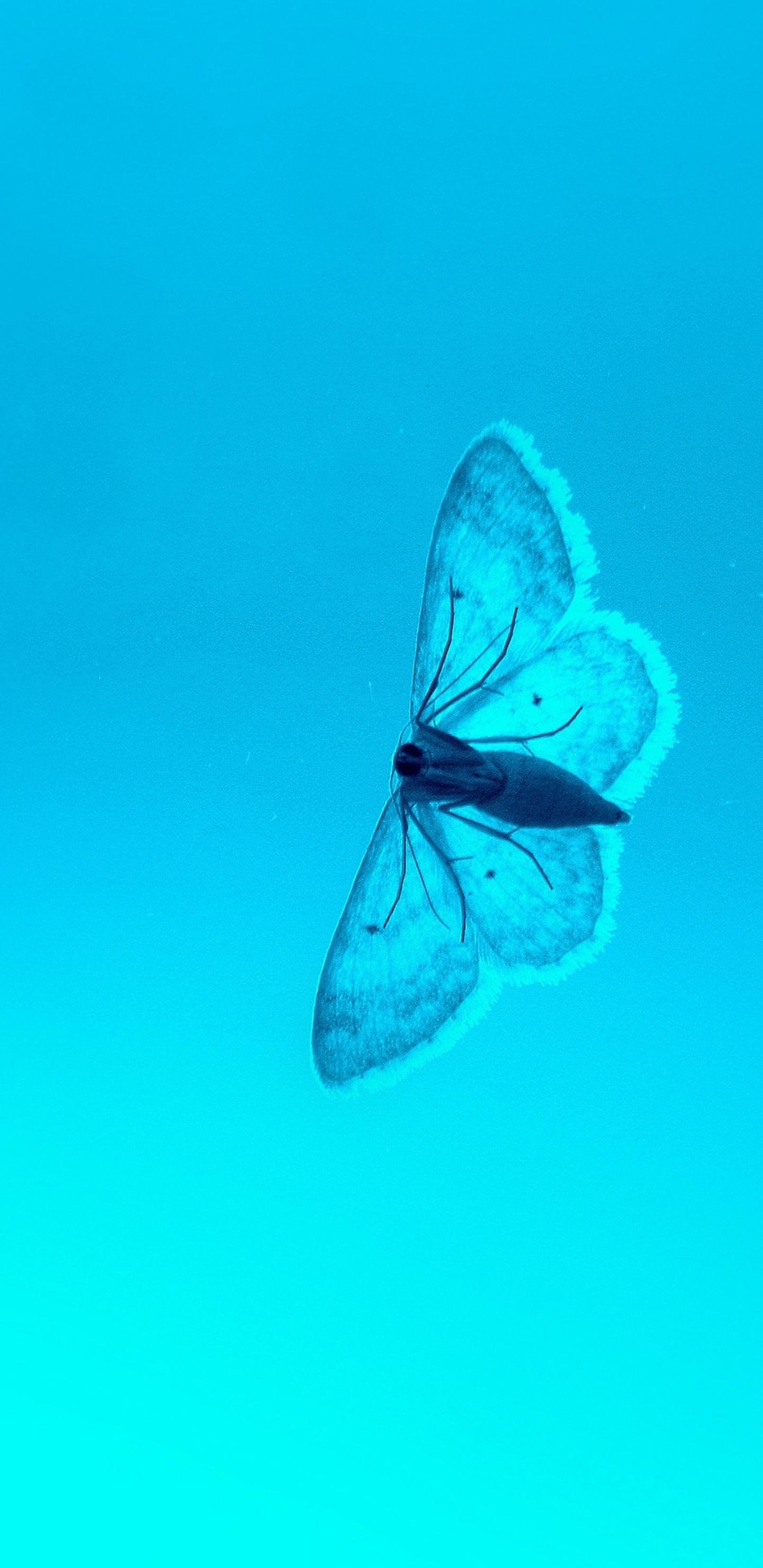 blue-butterfly-4k-e5.jpg