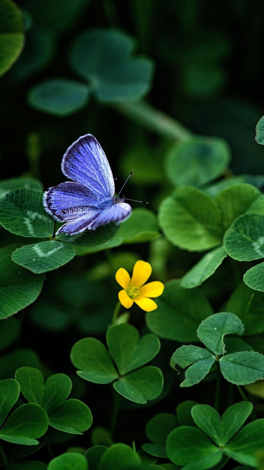 blue-butterfly-clover-4k-zo.jpg