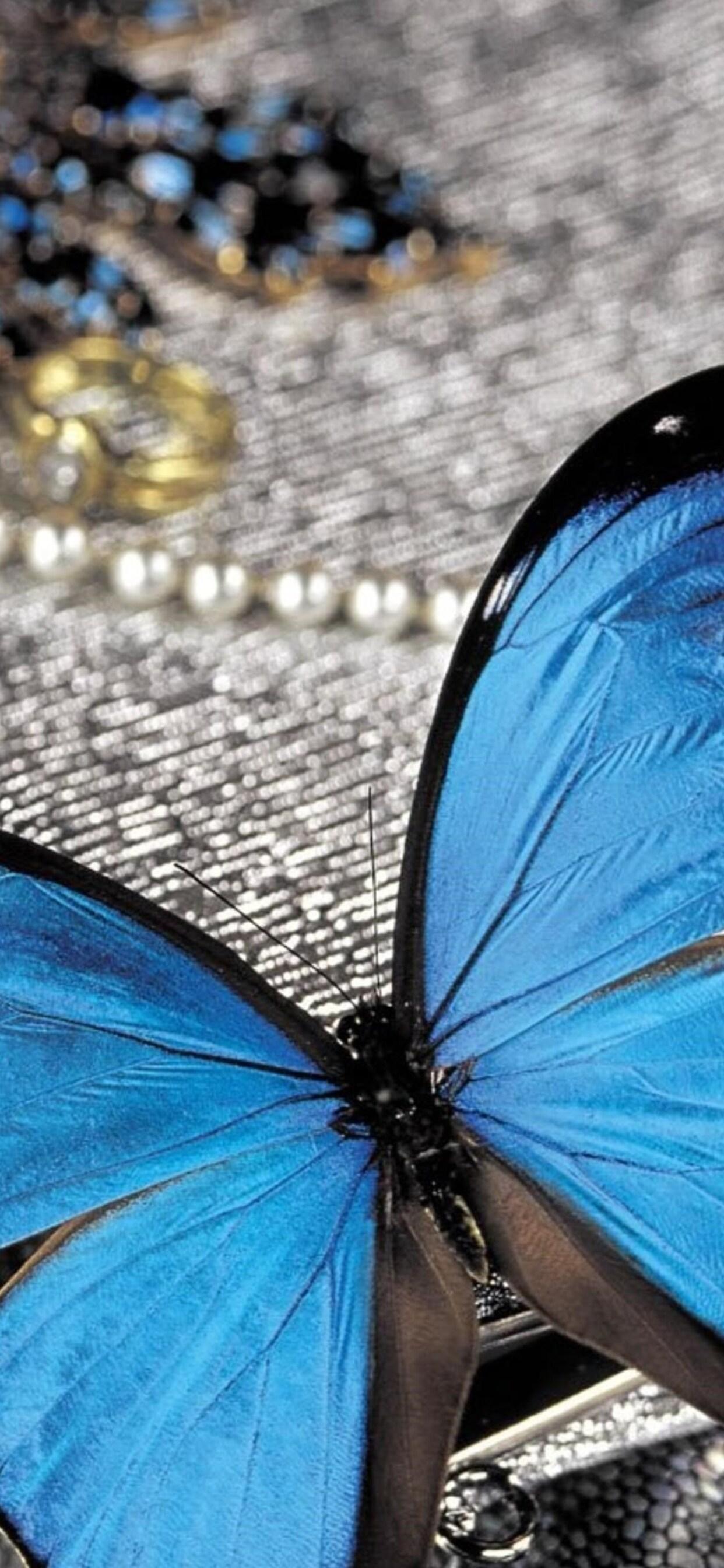 blue-butterfly-on-pearls.jpg