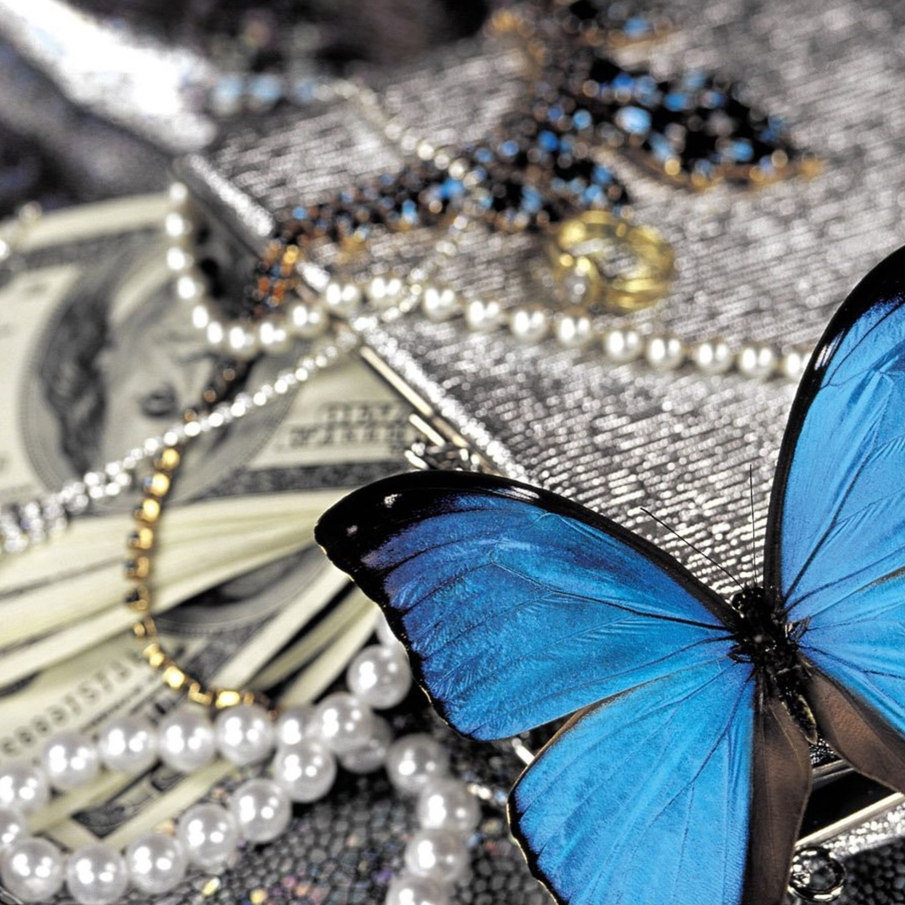 2932x2932 Blue Butterfly On Pearls Ipad Pro Retina Display