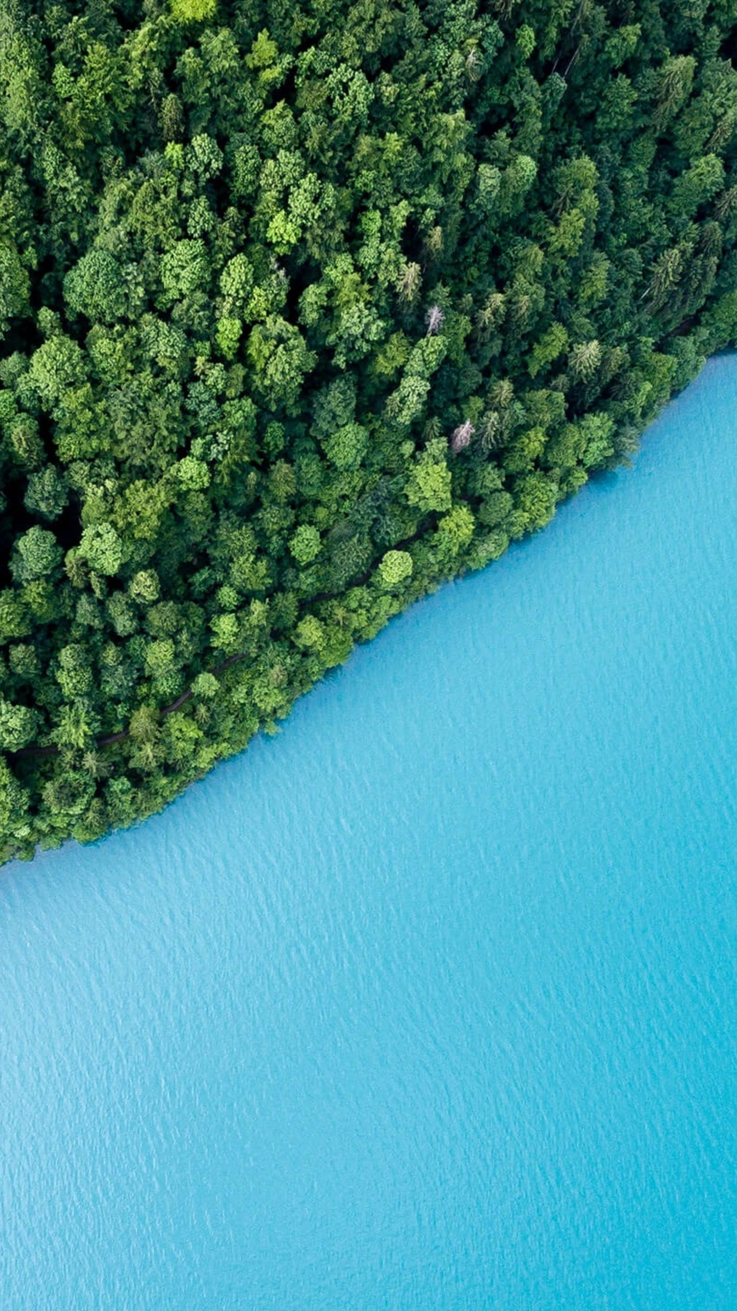 blue-lake-water-green-trees-plants-forests-xs.jpg