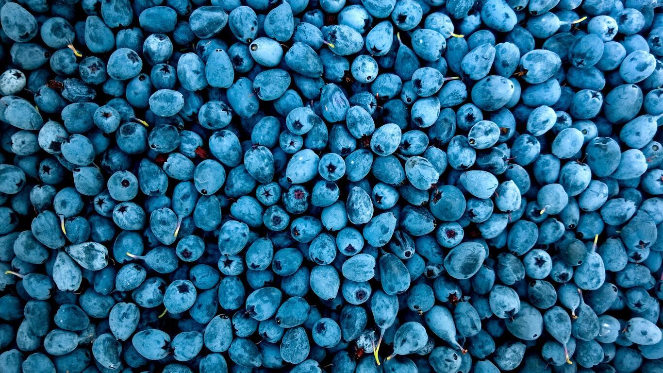 blueberries-qz.jpg