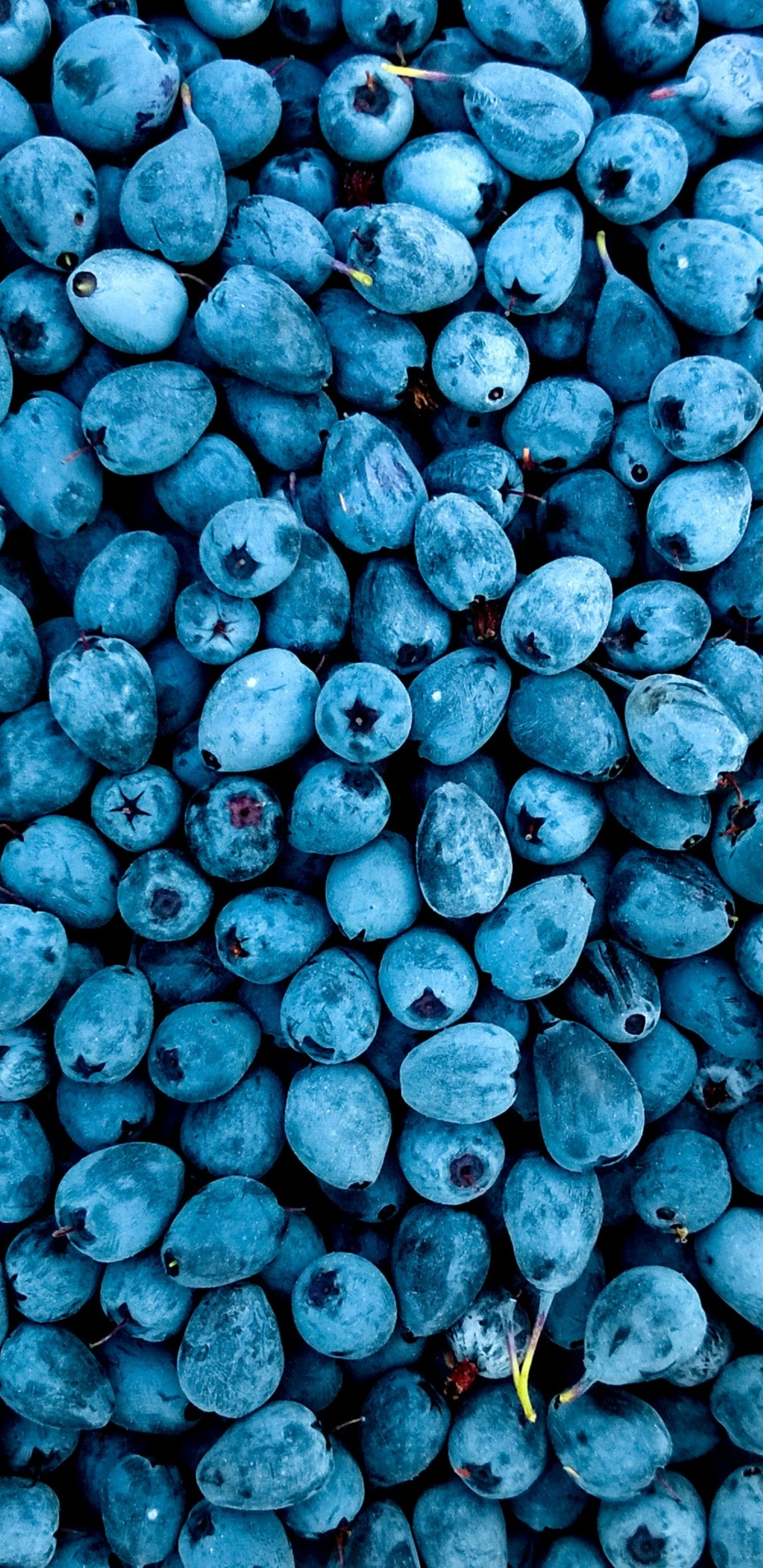 blueberries-qz.jpg