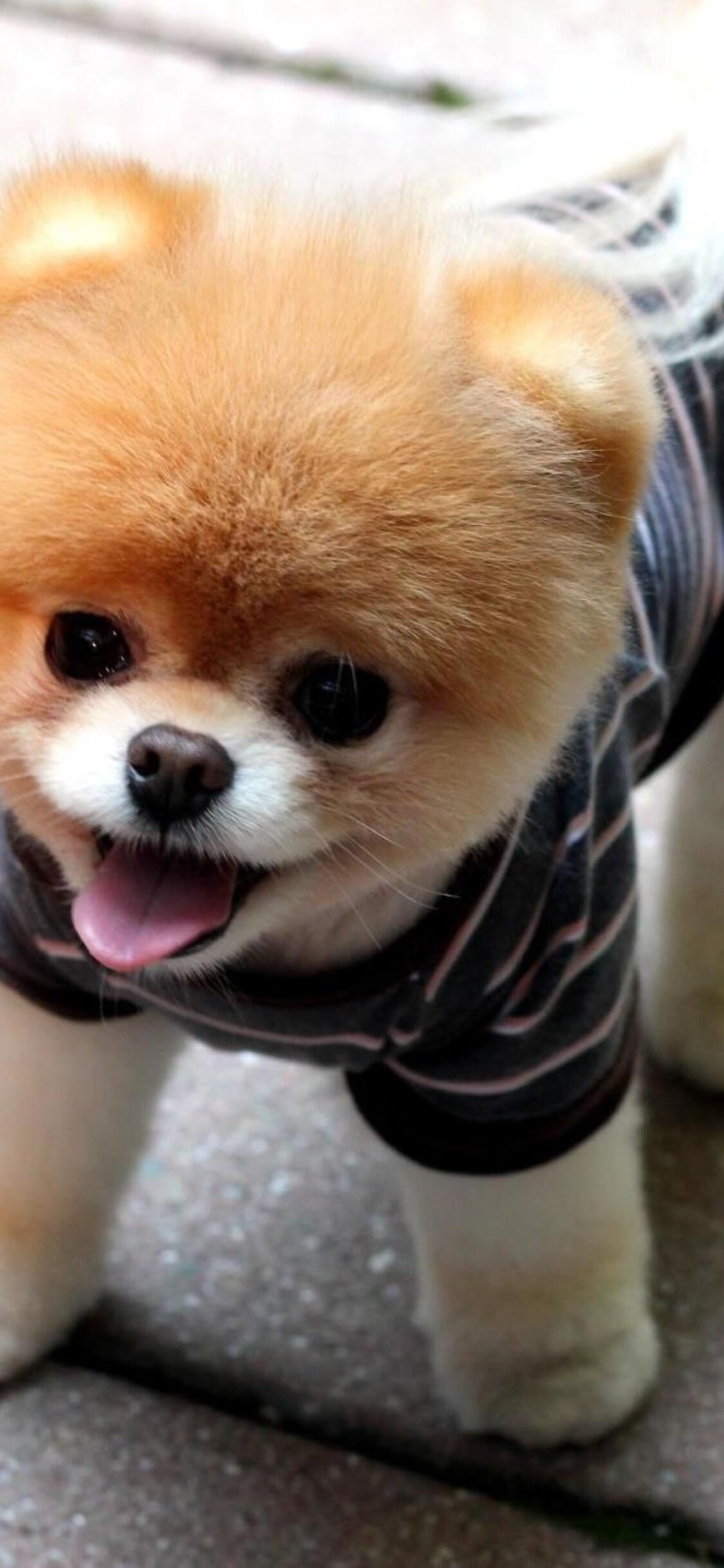 boo-puppies-qhd.jpg