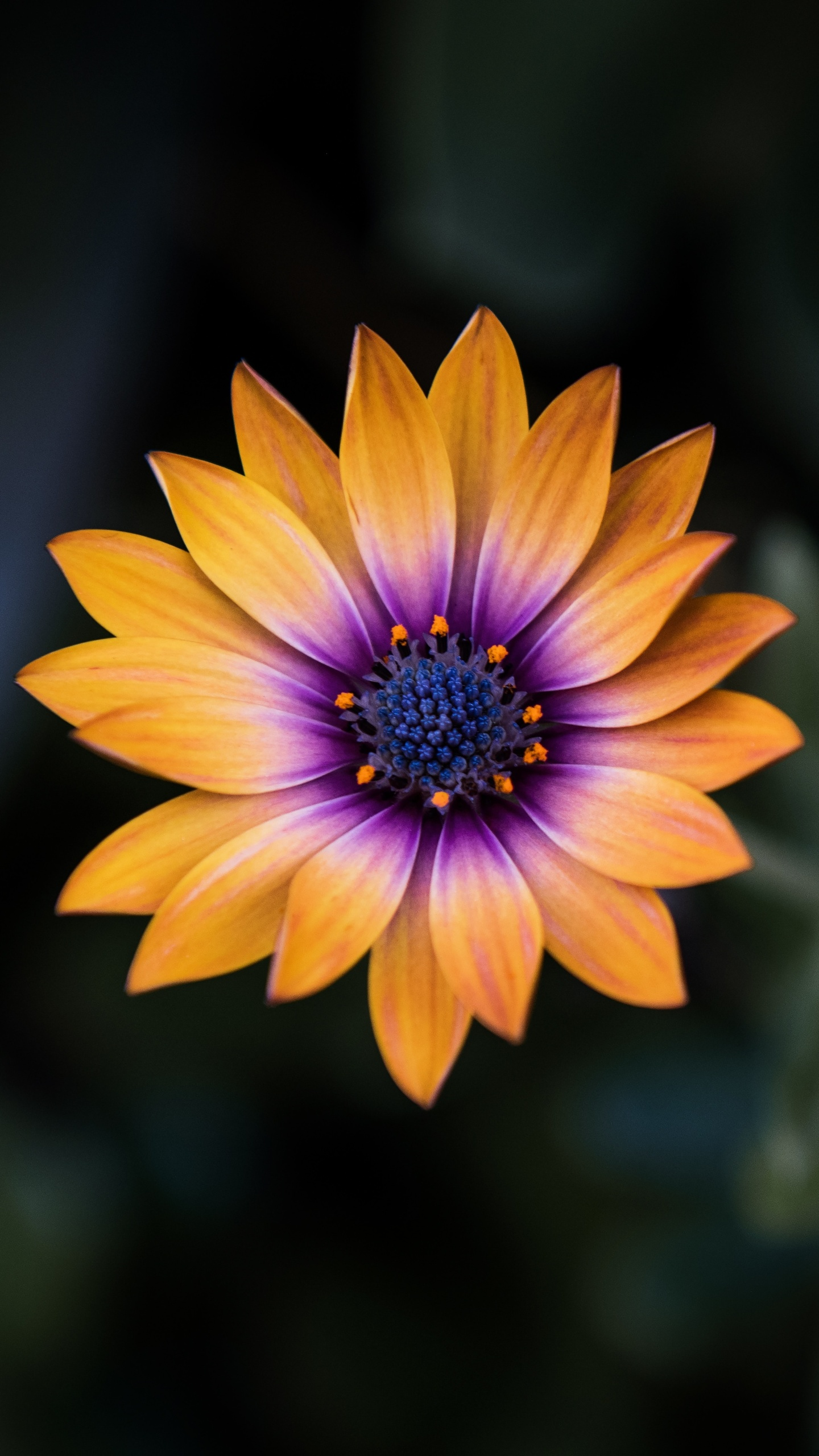 bright-orange-purple-flower-8k-8z.jpg
