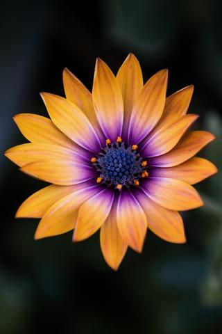bright-orange-purple-flower-8k-8z.jpg