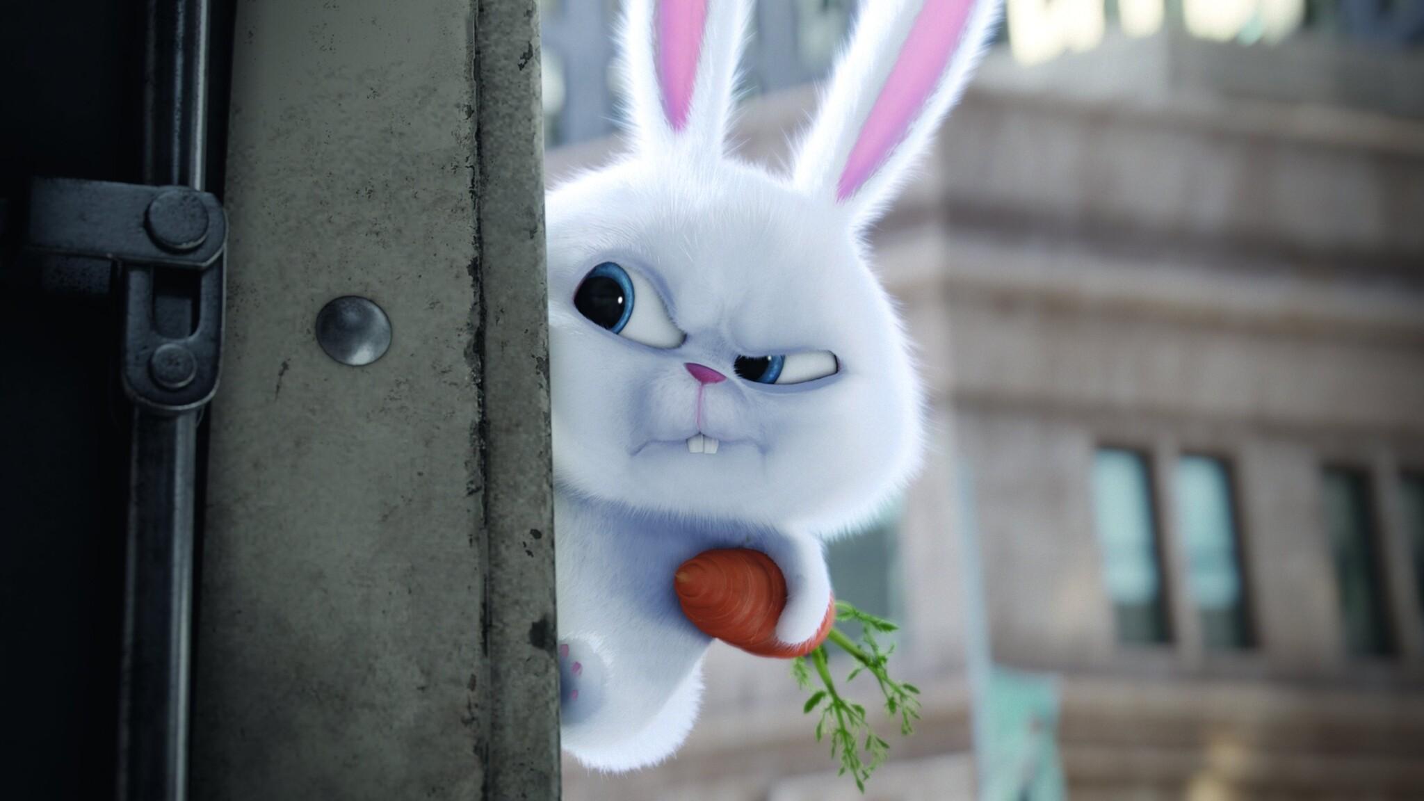 2048x1152 Bunny The Secrete Life Of Pets Movie 2048x1152
