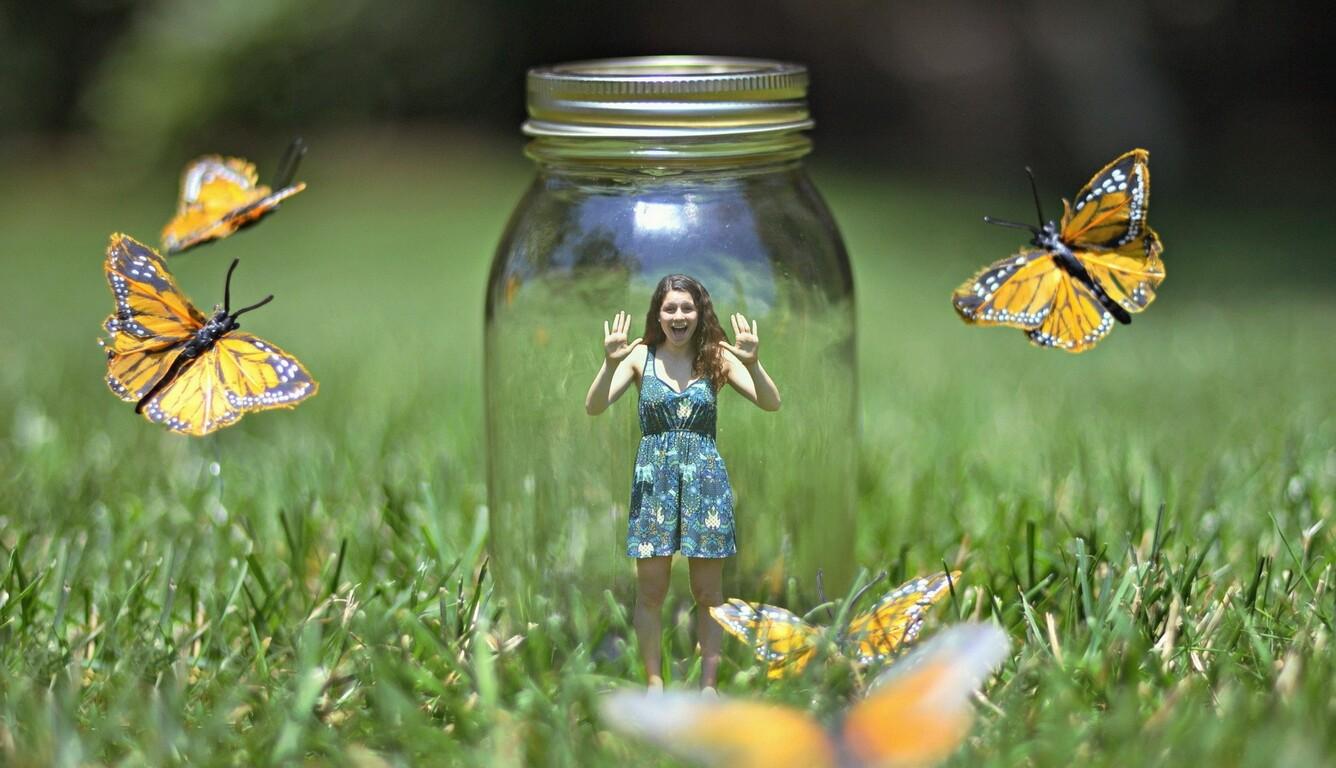 butterflies-bank-art.jpg