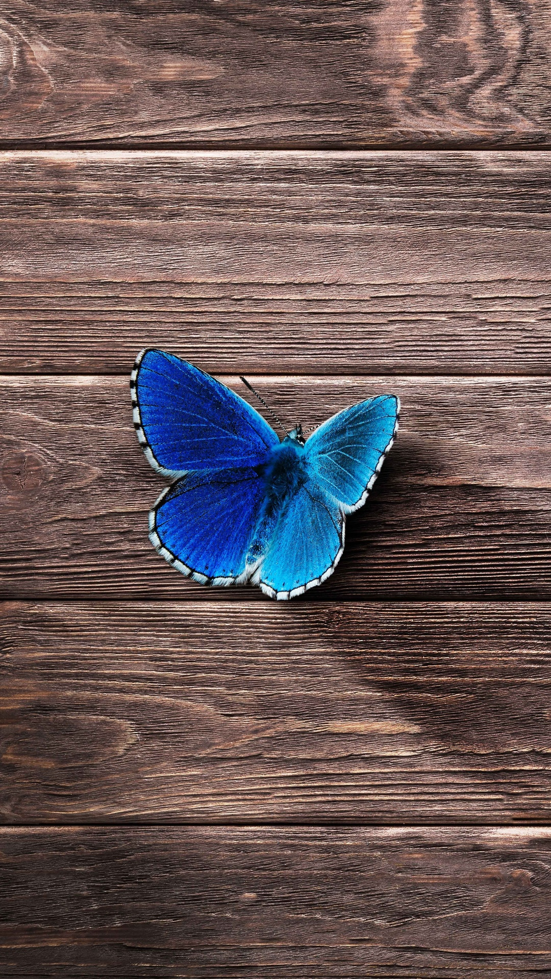 8k Animal Wallpaper Download: 1080x1920 Butterfly 8k Iphone 7,6s,6 Plus, Pixel Xl ,One