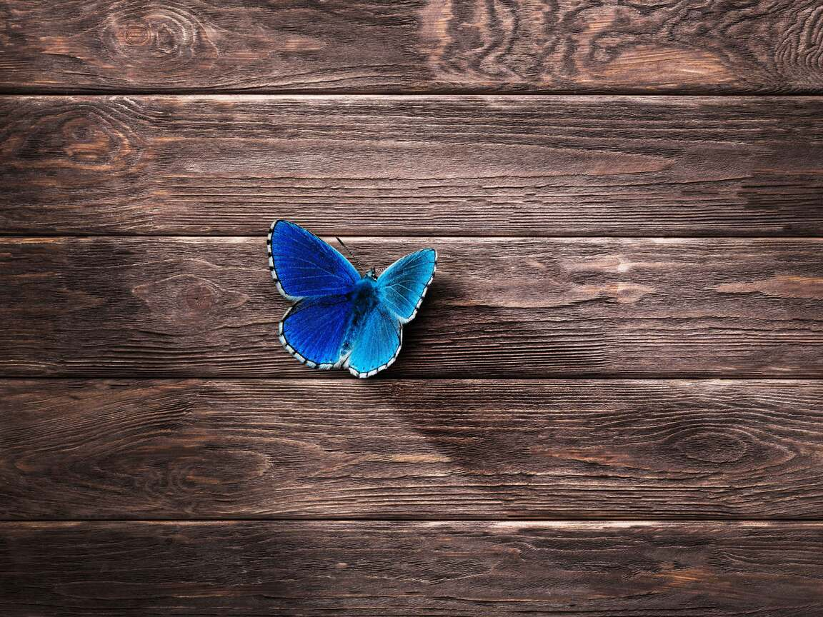 butterfly-8k-is.jpg