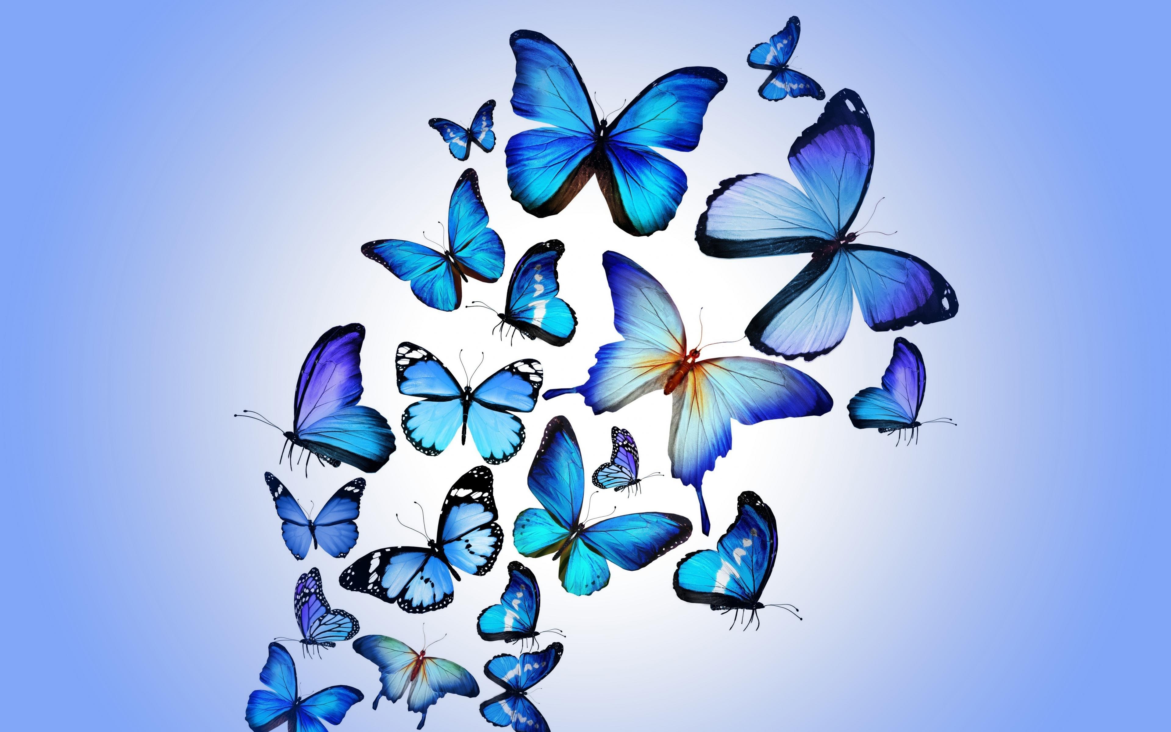 butterfly-art.jpg