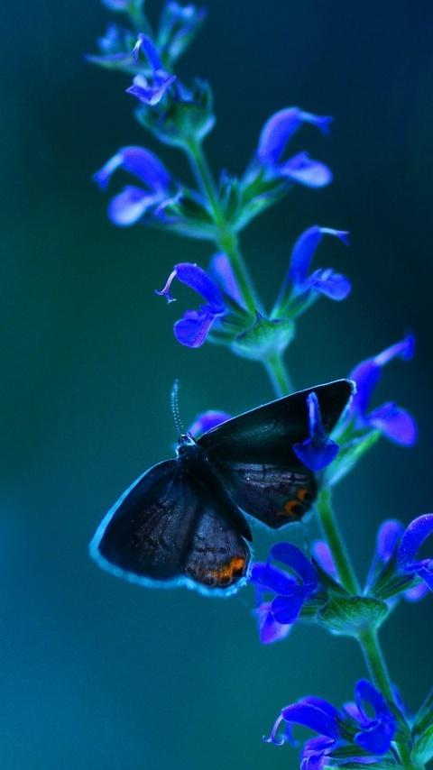 butterfly-blue-flowers-xm.jpg