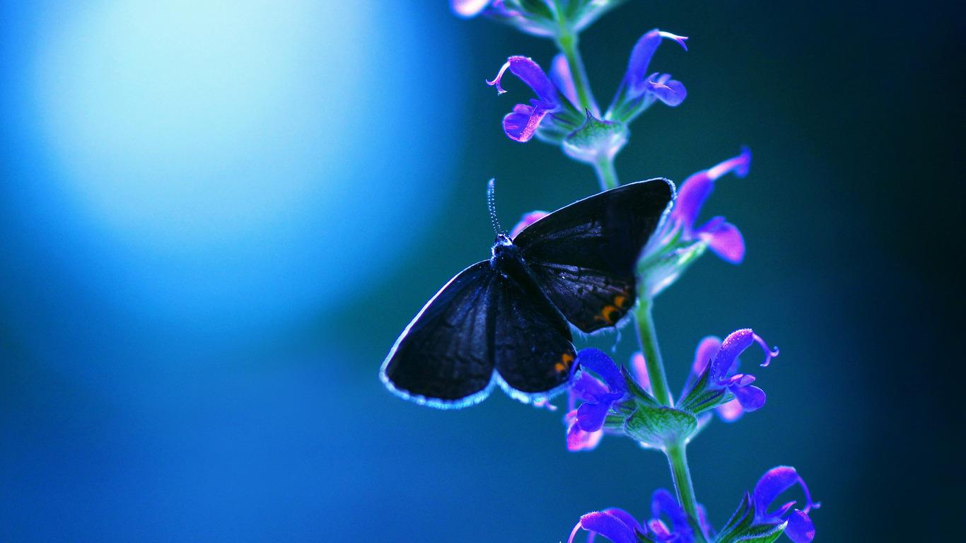 1366x768 butterfly flower 1366x768 resolution hd 4k wallpapers