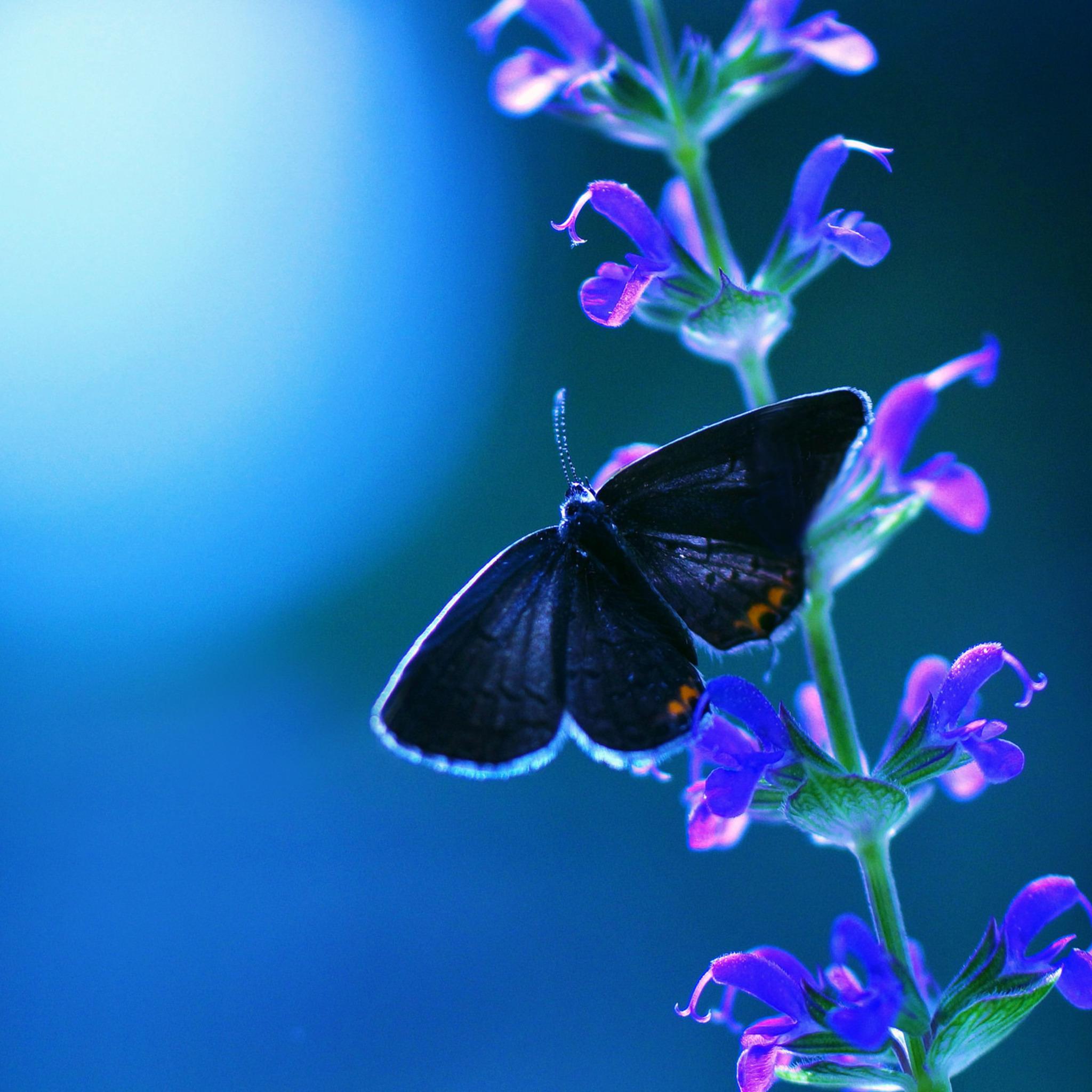 butterfly-flower-ad.jpg