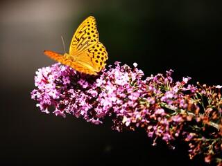 butterfly-in-garden.jpg