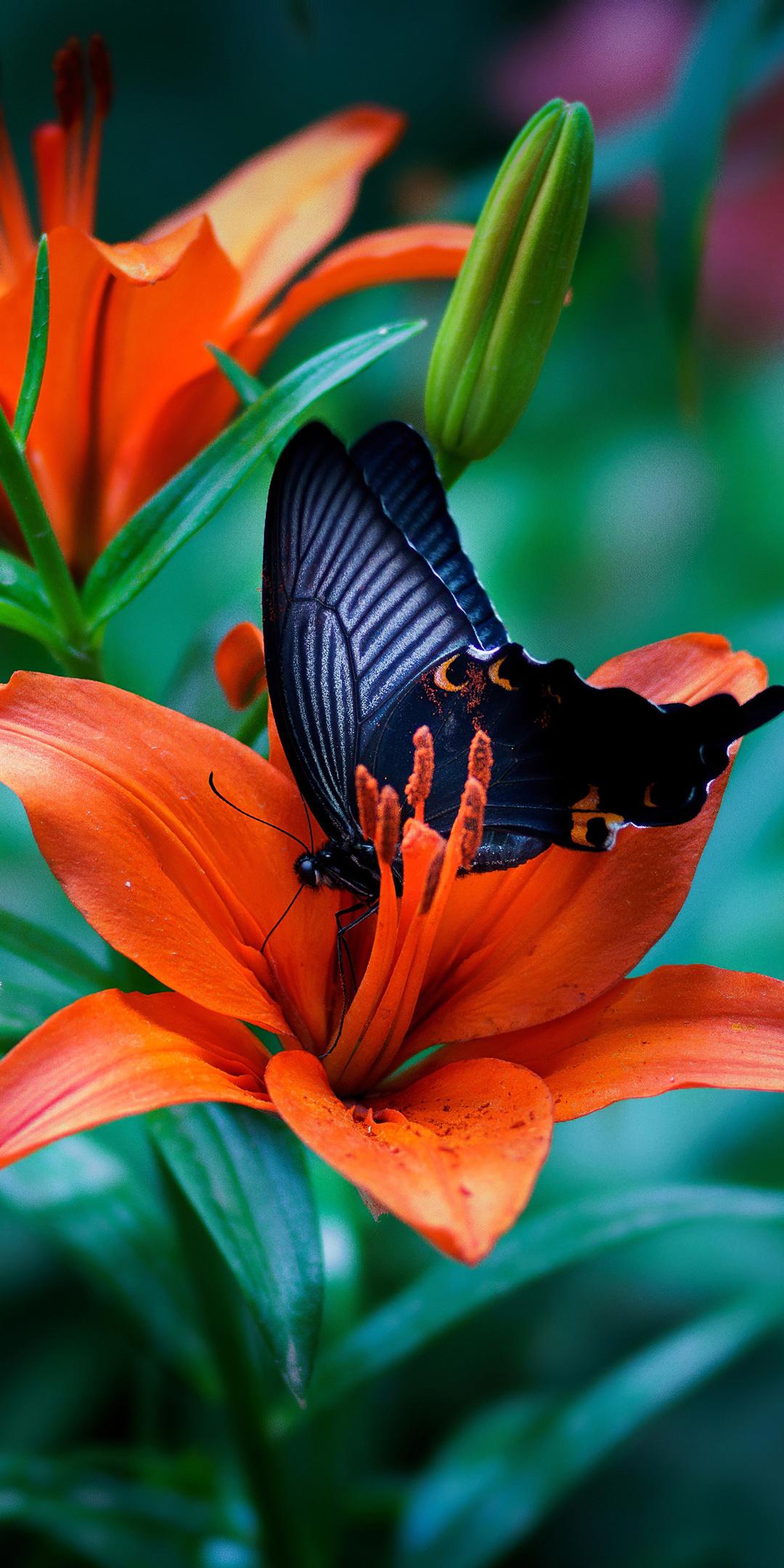 butterfly-macro-4k-6k.jpg