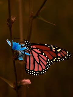 butterfly-macro-5k-0c.jpg