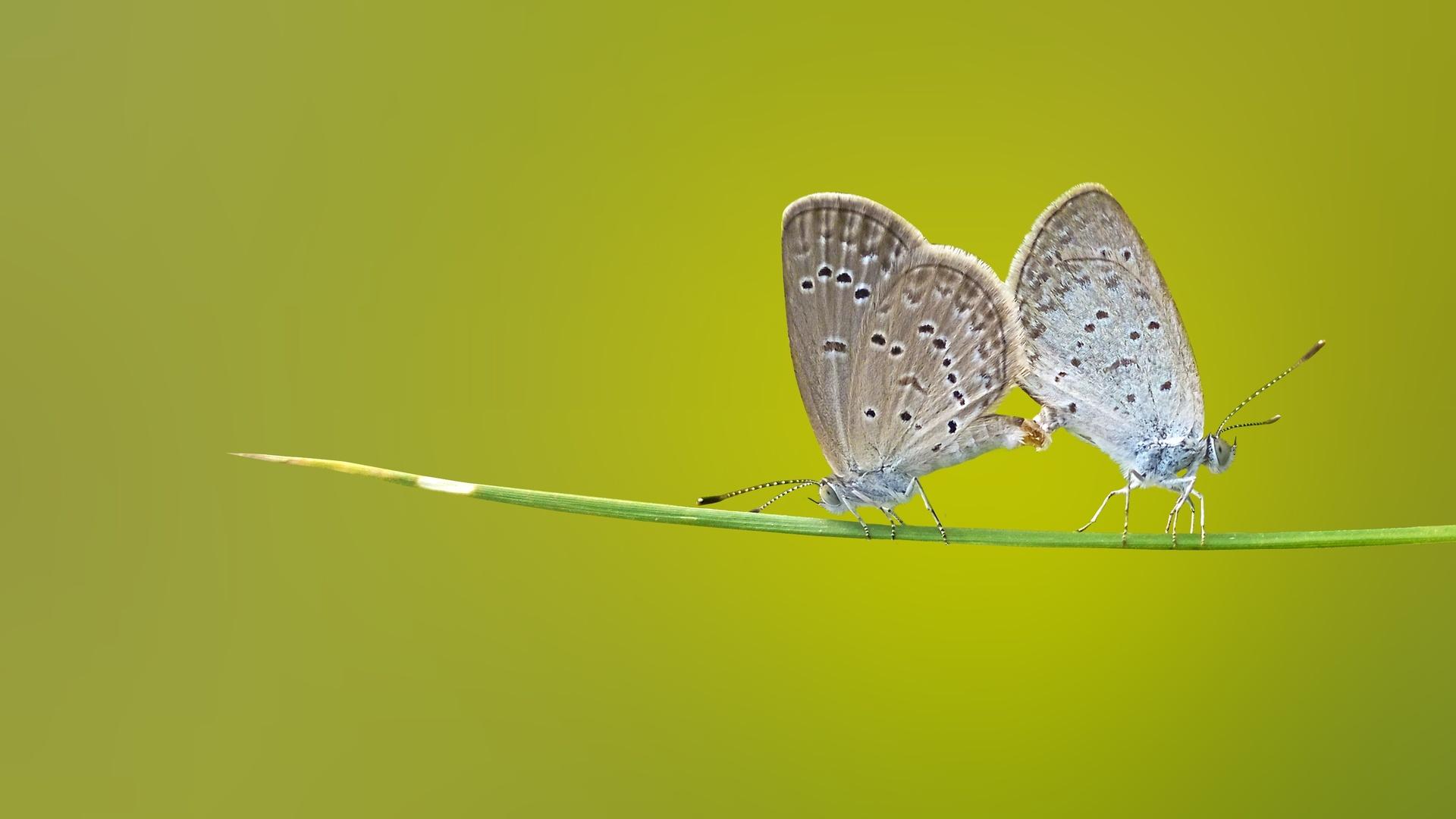 butterfly-macro-c7.jpg