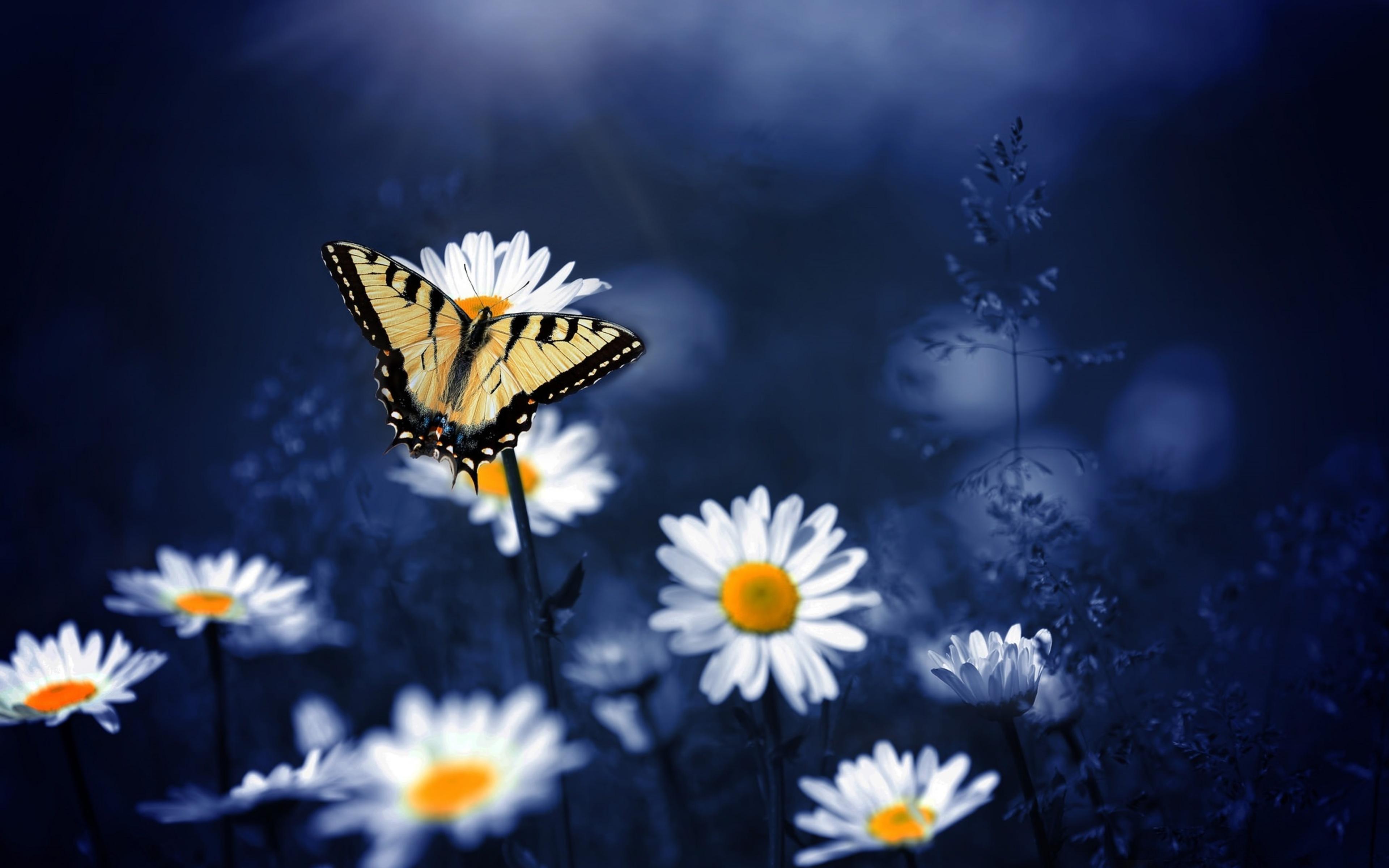 butterfly-on-flowers-8k.jpg