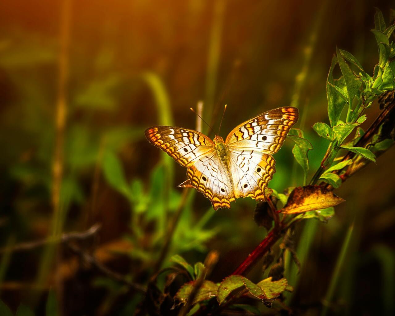 butterfly-on-leaf-sm.jpg