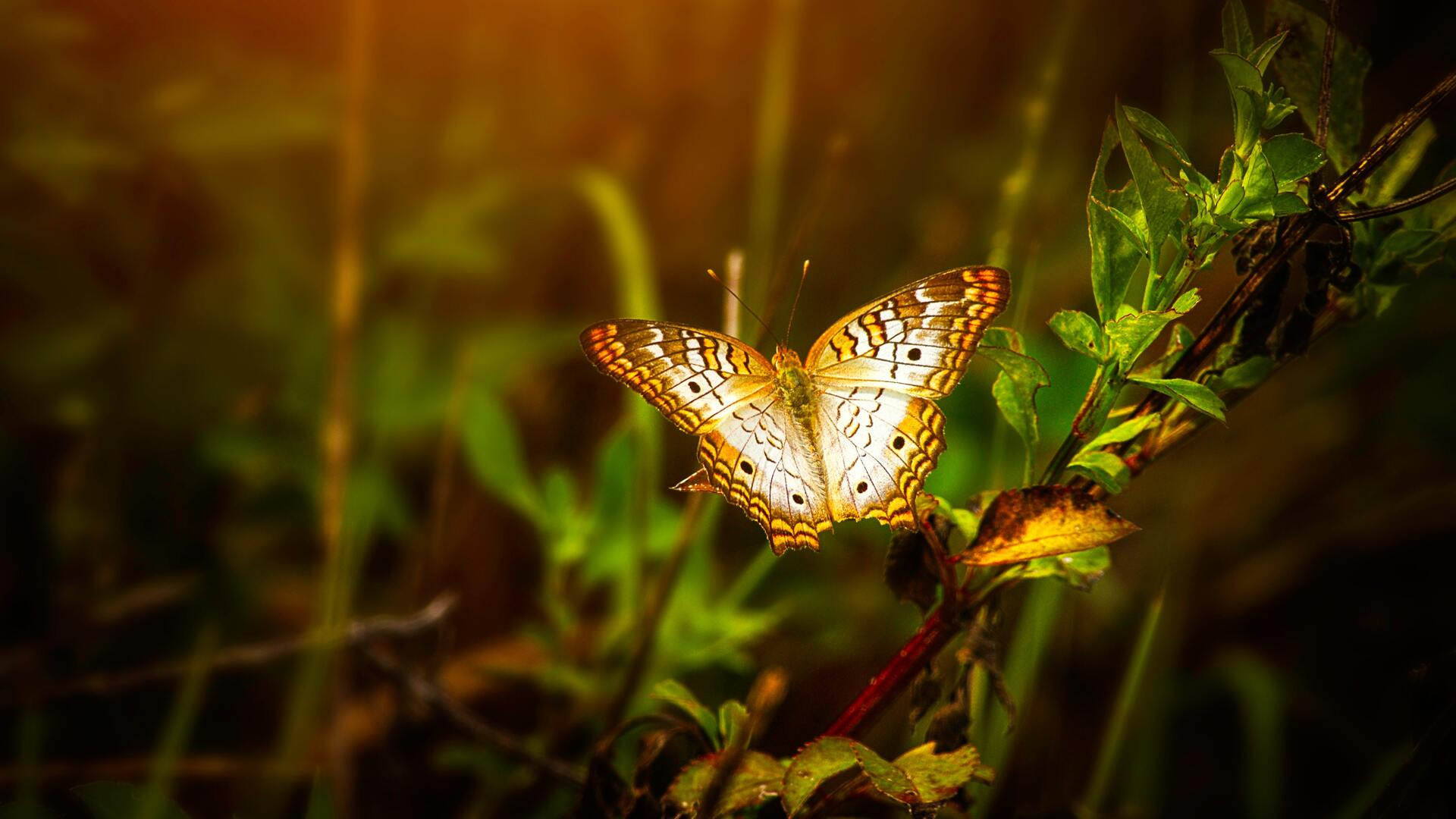 1920x1080 Butterfly On Leaf Laptop Full Hd 1080p Hd 4k Wallpapers Images Backgrounds Photos And Pictures