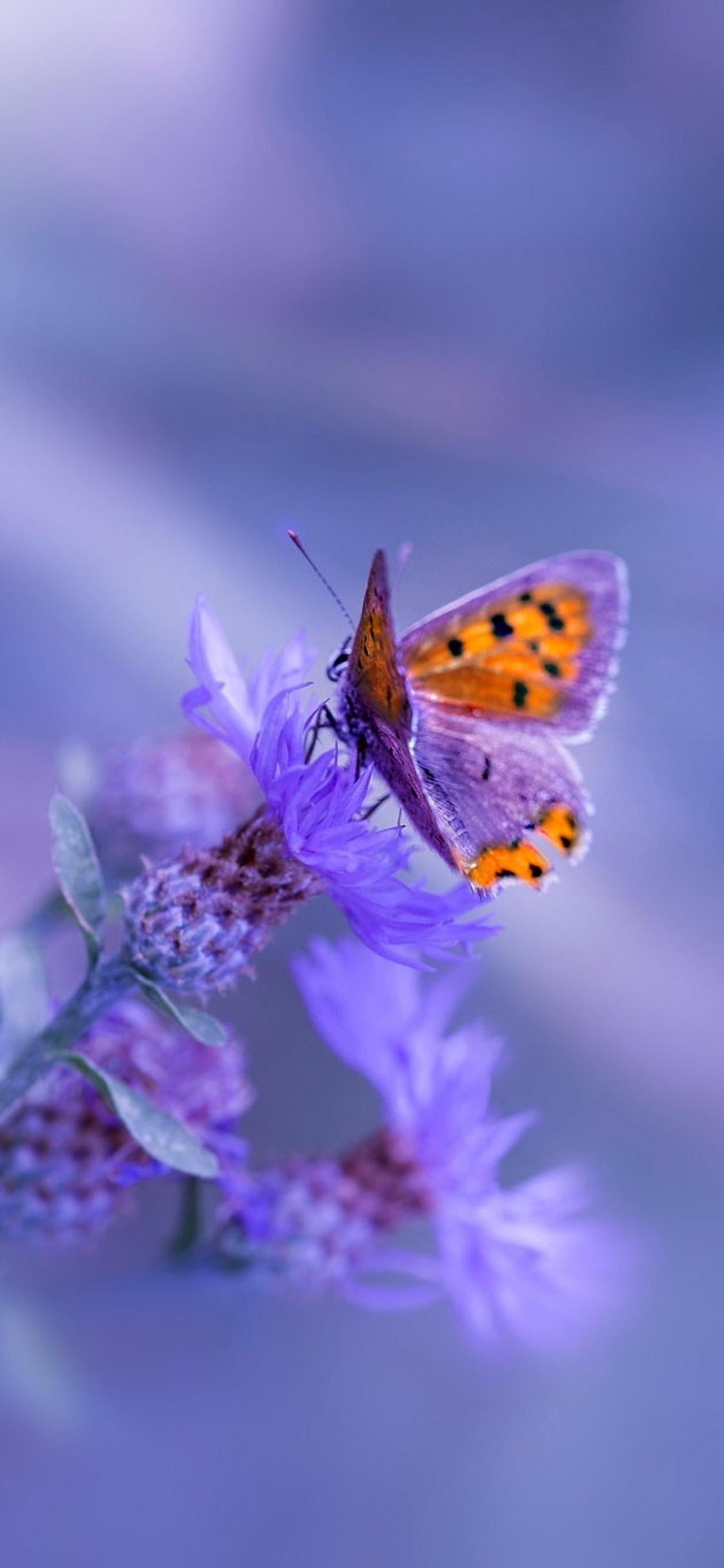 1125x2436 Butterfly Purple Flower Iphone Xs Iphone 10 Iphone X Hd 4k